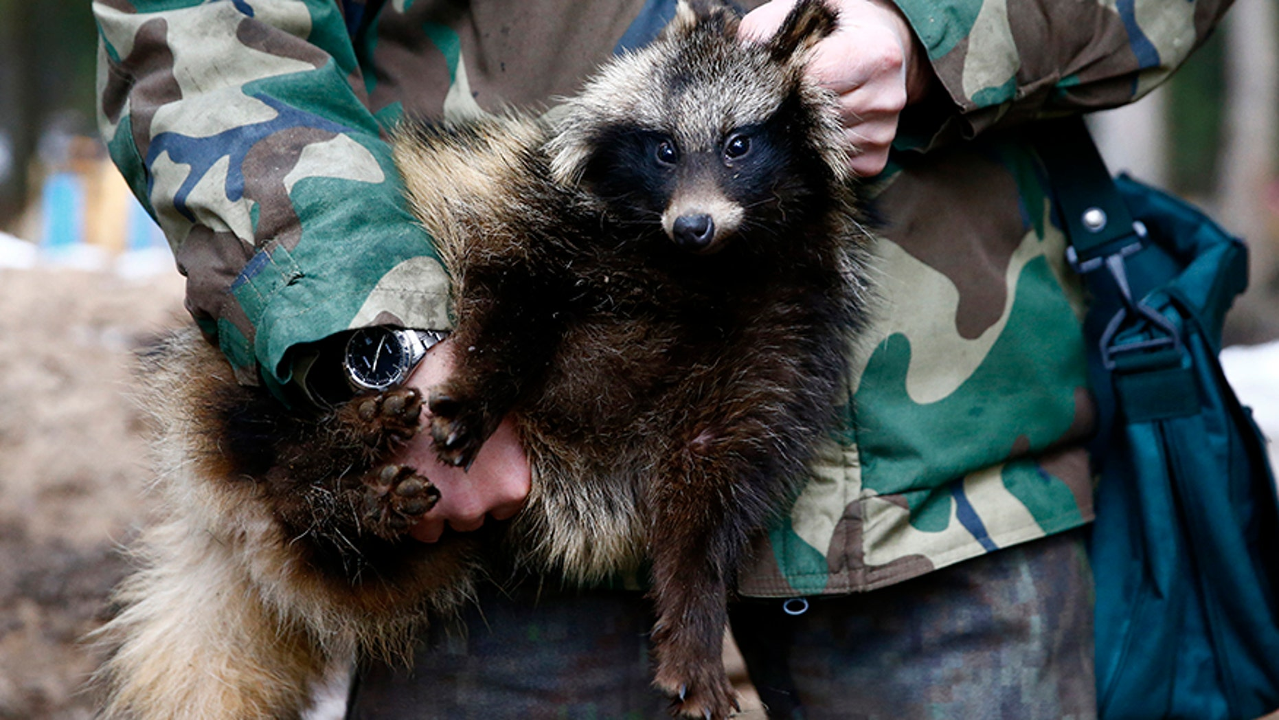 Holding up a raccoon like this hunter could land you six months of jail time in Utah.