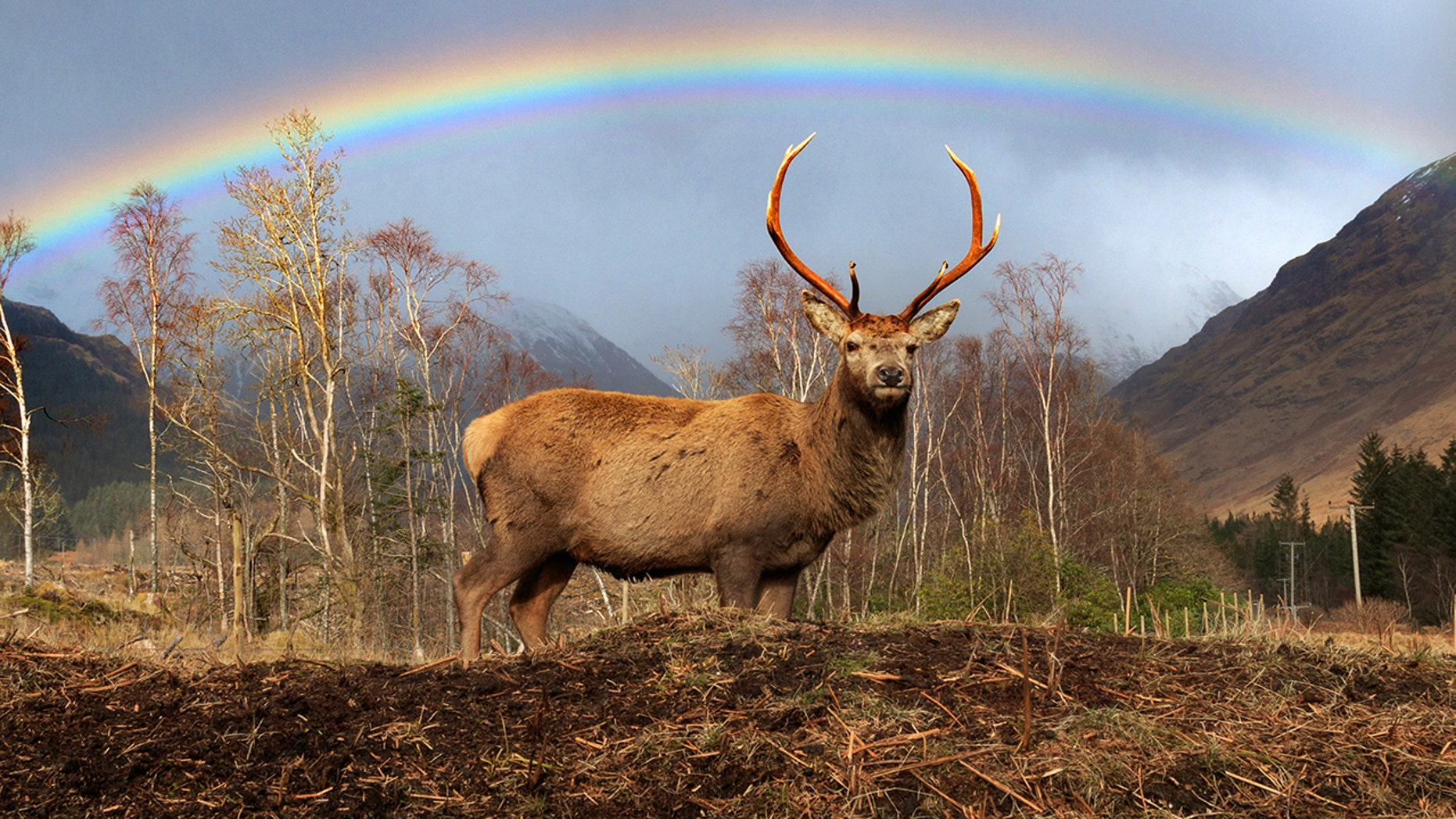 """Stephen Davies, of Scotland, says he was in the right place at the right time to capture the remarkable pics. """"It was a wow moment,"""" he said."""