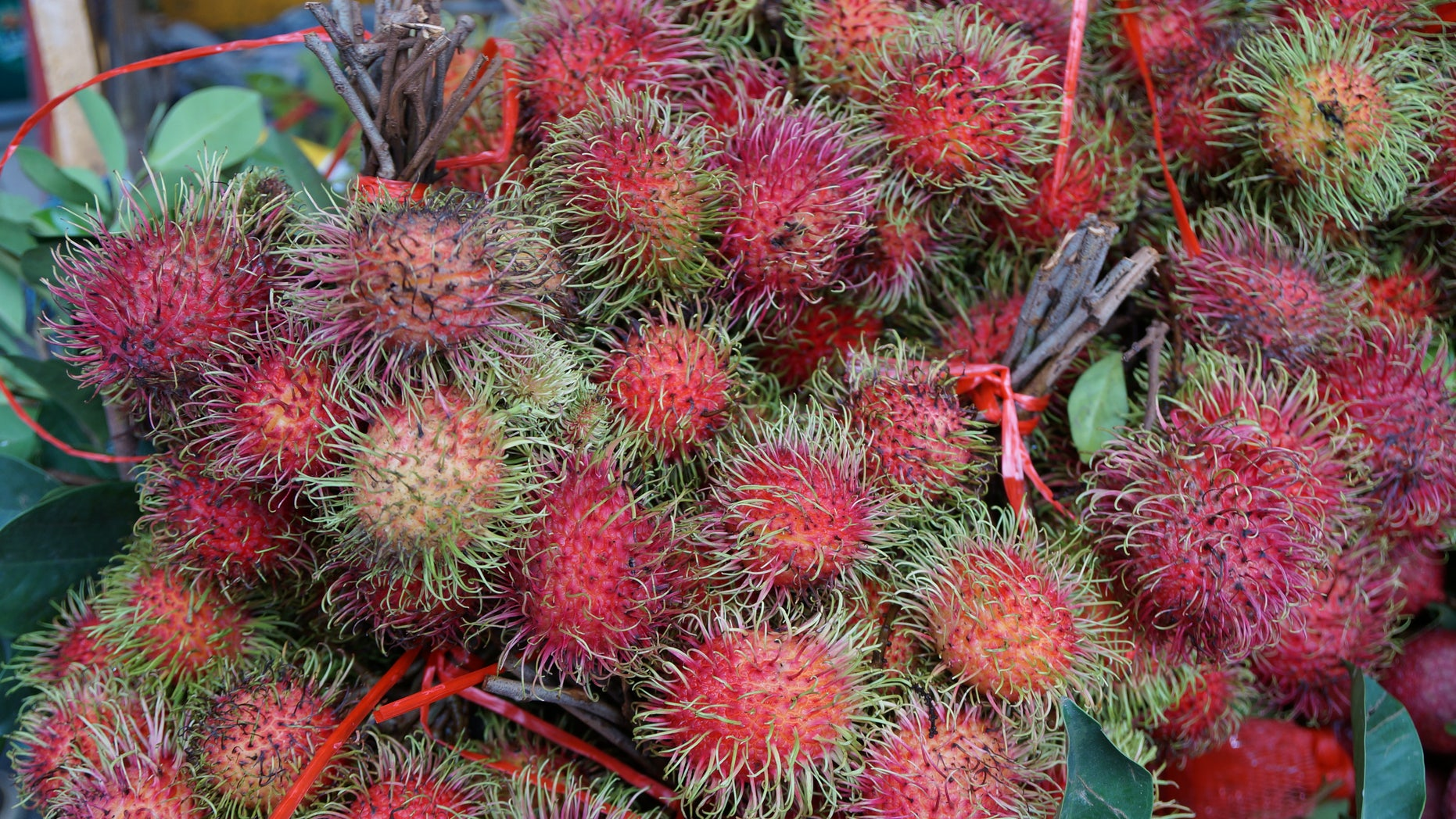 The rambutan fruit is both delicious and full of antioxidants. (Image courtesy of Chris Kilham)