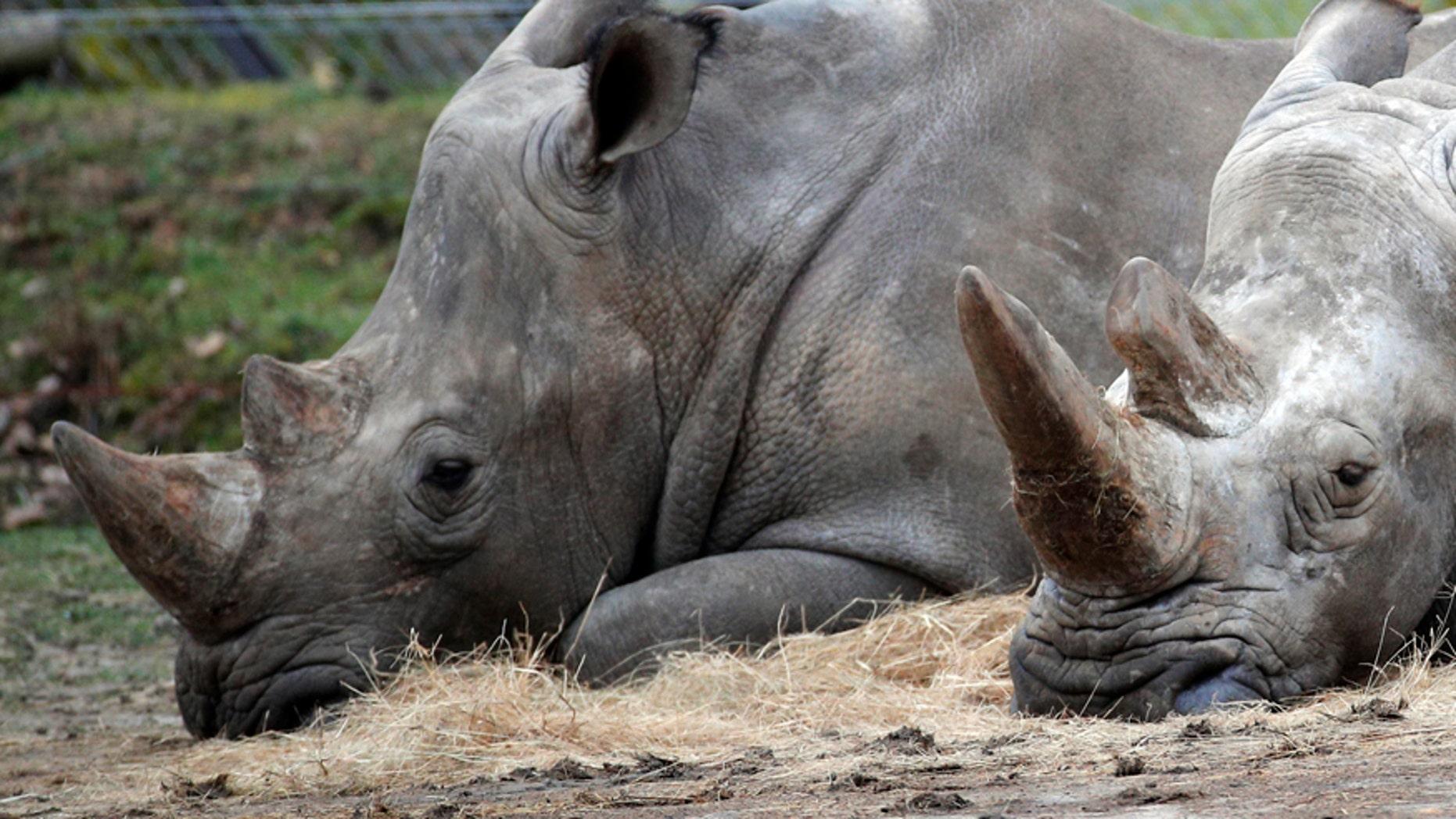 Brazen Killing Of Rhinoceros In Paris Puts Zoo Security In Spotlight Fox News