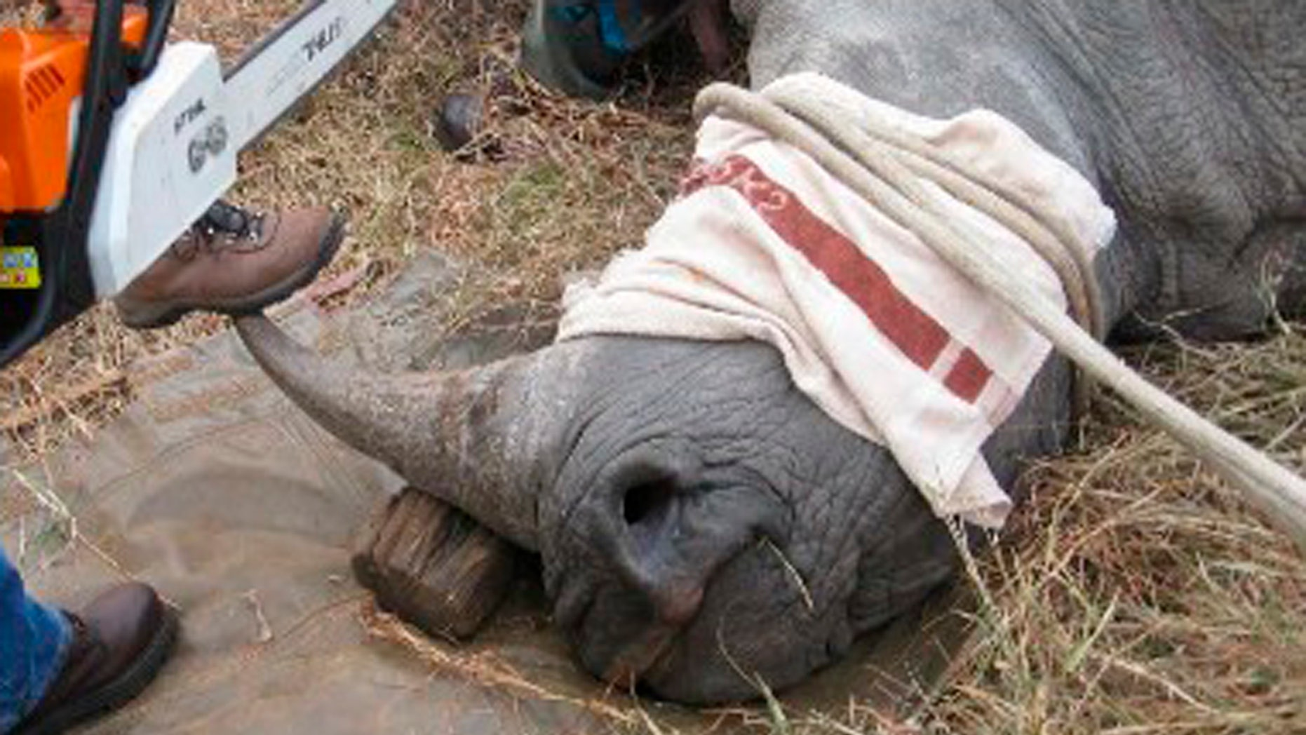 f344ef0a7a2b Fueled by demand from Asia, rhino poaching hits record across Africa ...