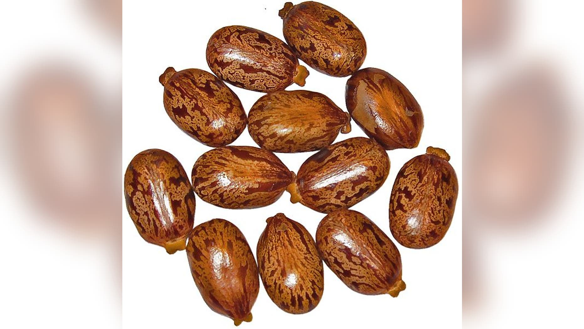 Castor beans, from which ricin is synthesized