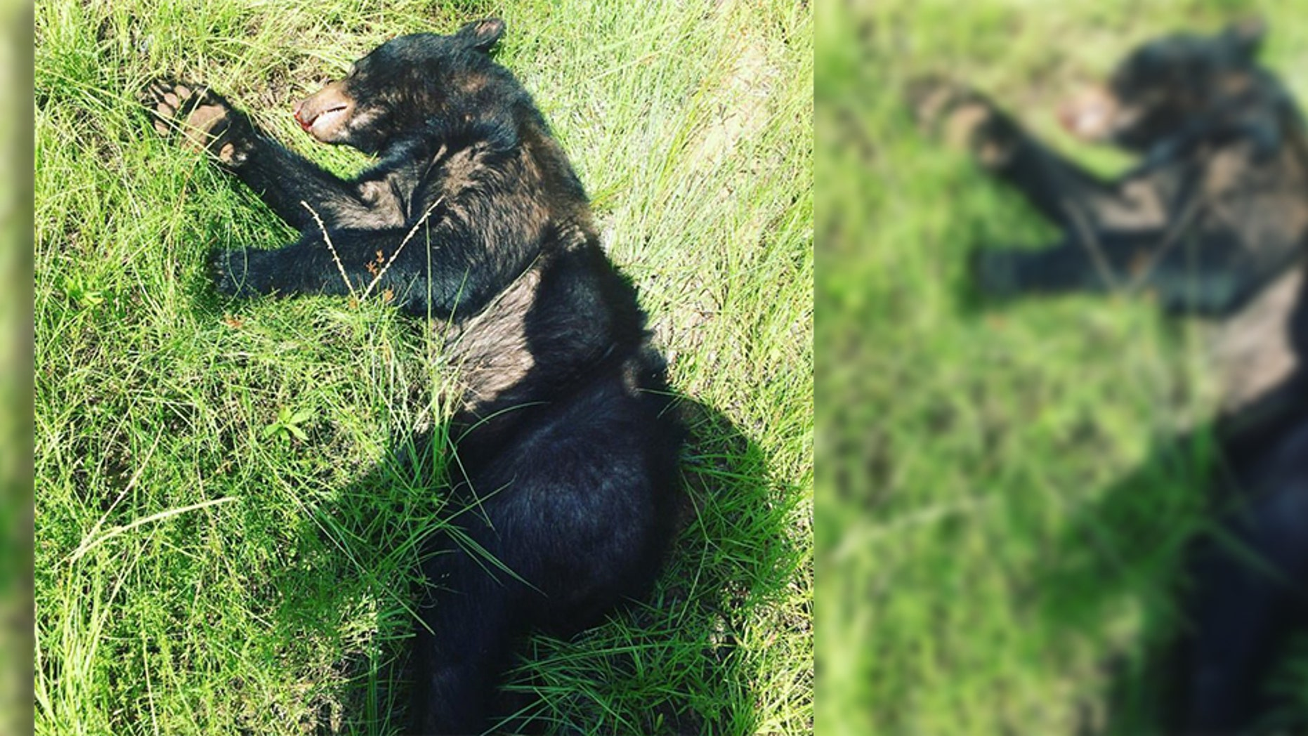 The young male bear was found dead in Warner Robins, police said.