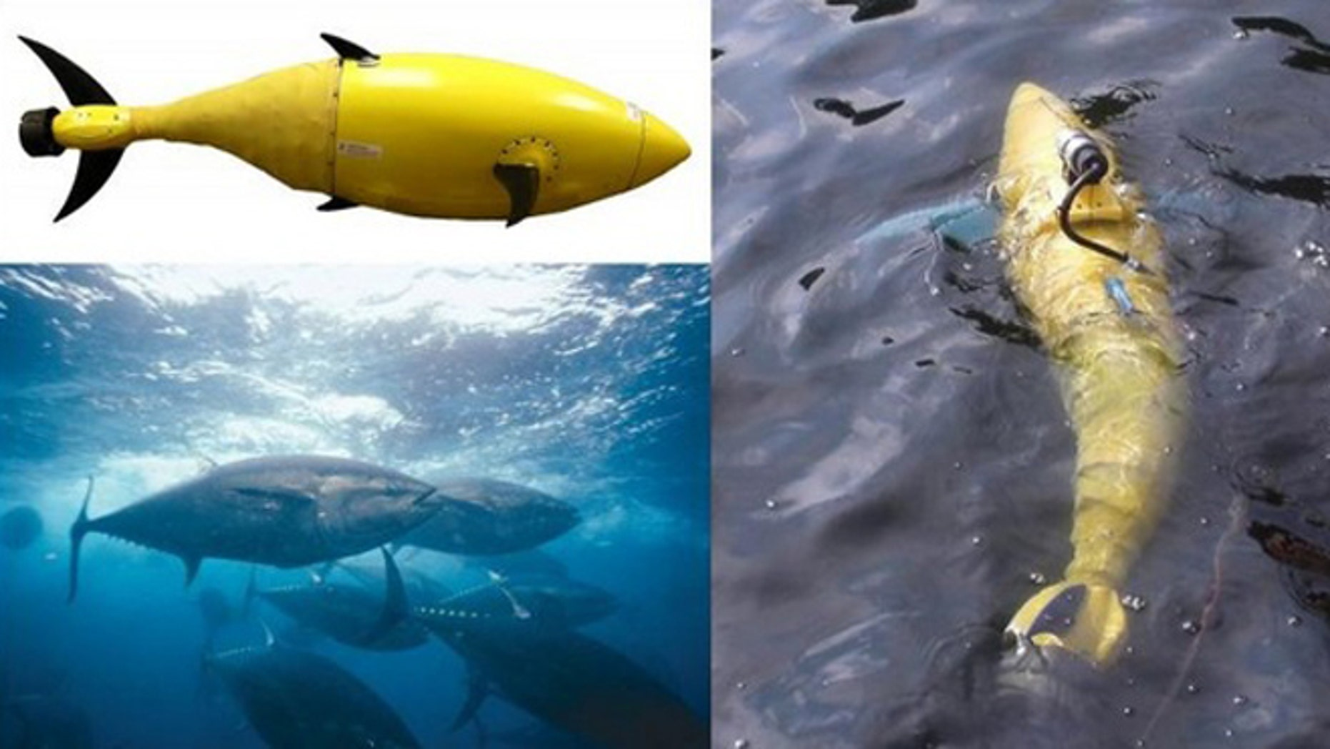 The BIOSwimmer is an underwater robot designed in the shape of a robotic tuna fish for surveillance and patrols.