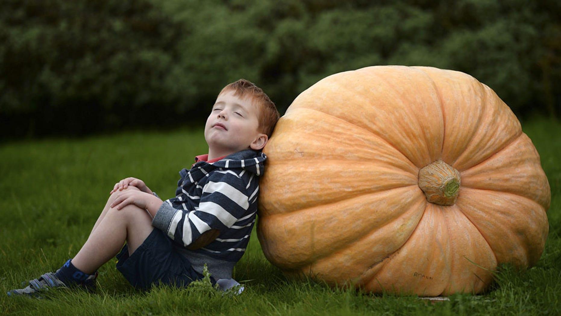Pumpkin, pumpkin everywhere.