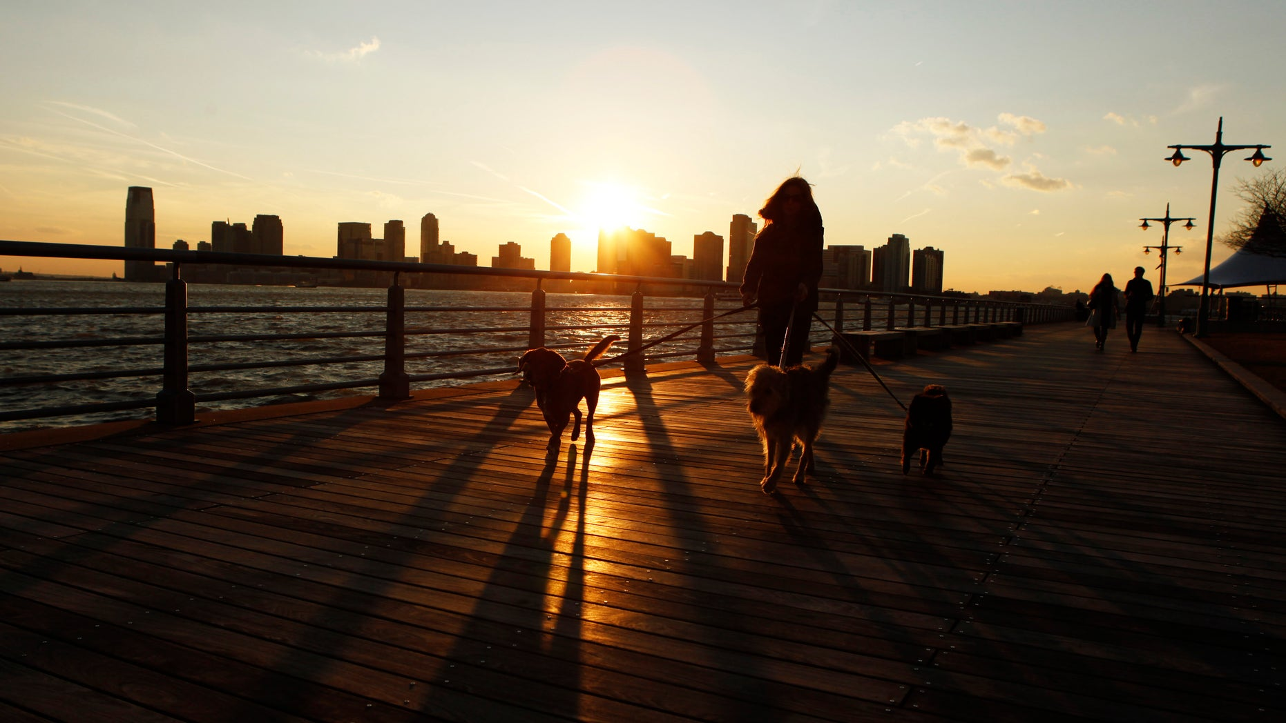 A woman walks three dogs along the West Side Highway as the sun sets behind them after an unseasonably warm winter day in New York, February 1, 2012. REUTERS/Lucas Jackson (UNITED STATES - Tags: ENVIRONMENT ANIMALS SOCIETY) - RTR2X6NH