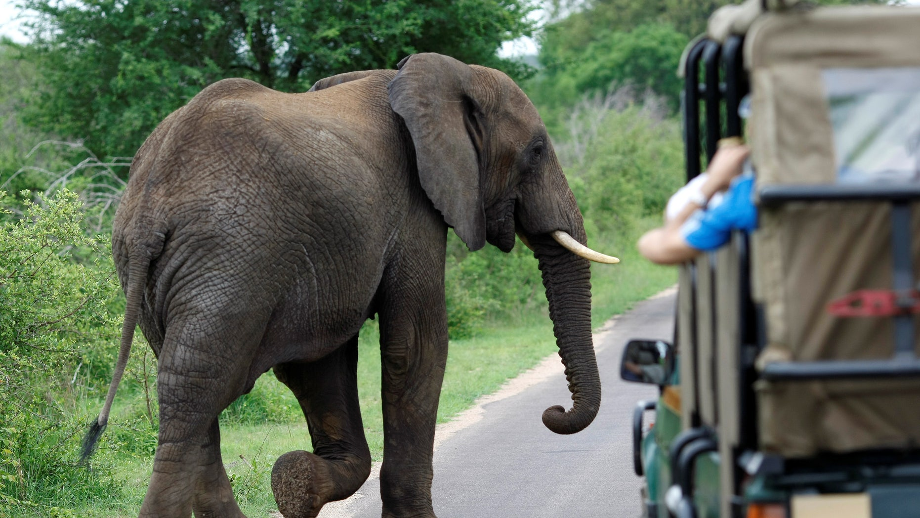 A bull elephant walks past a car filled with tourists in South Africa's Kruger National Park, December 10, 2009.