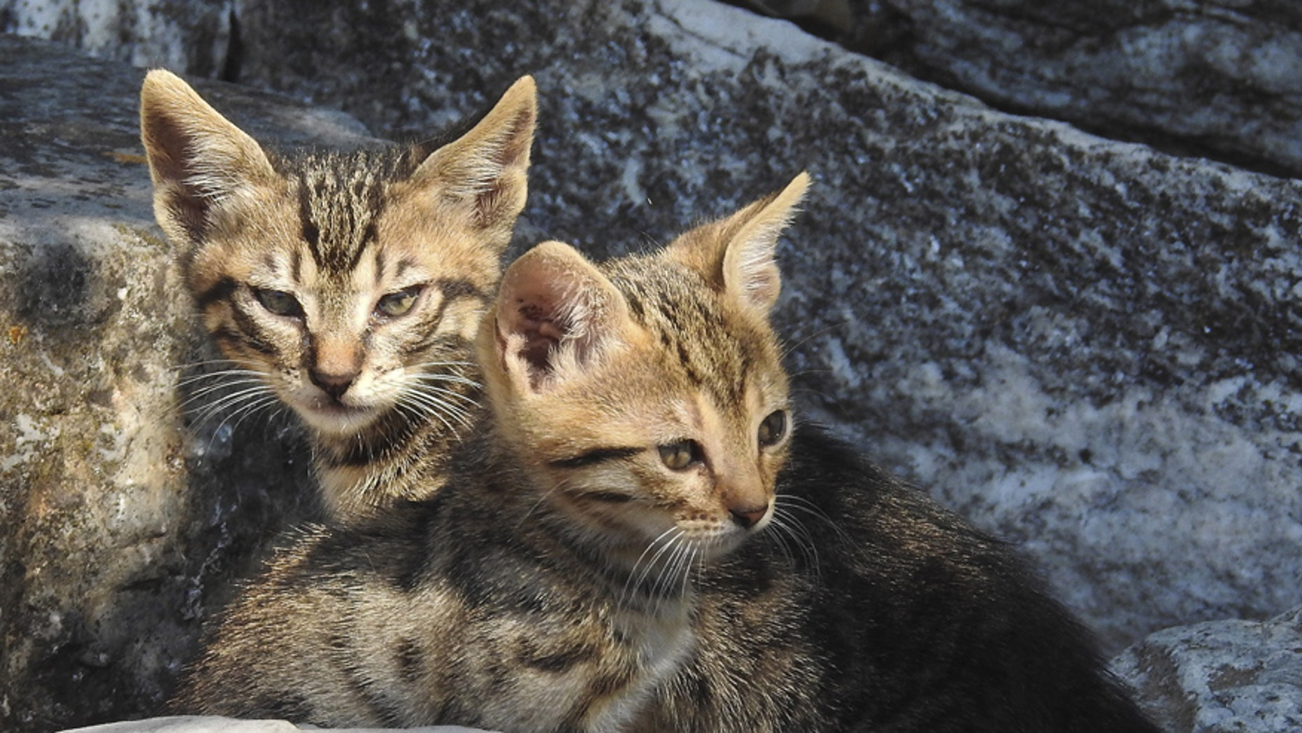 Two kittens lie in the ruins of the ancient Agora in Athens June 20, 2015. REUTERS/Paul Hanna - RTX1HE9V