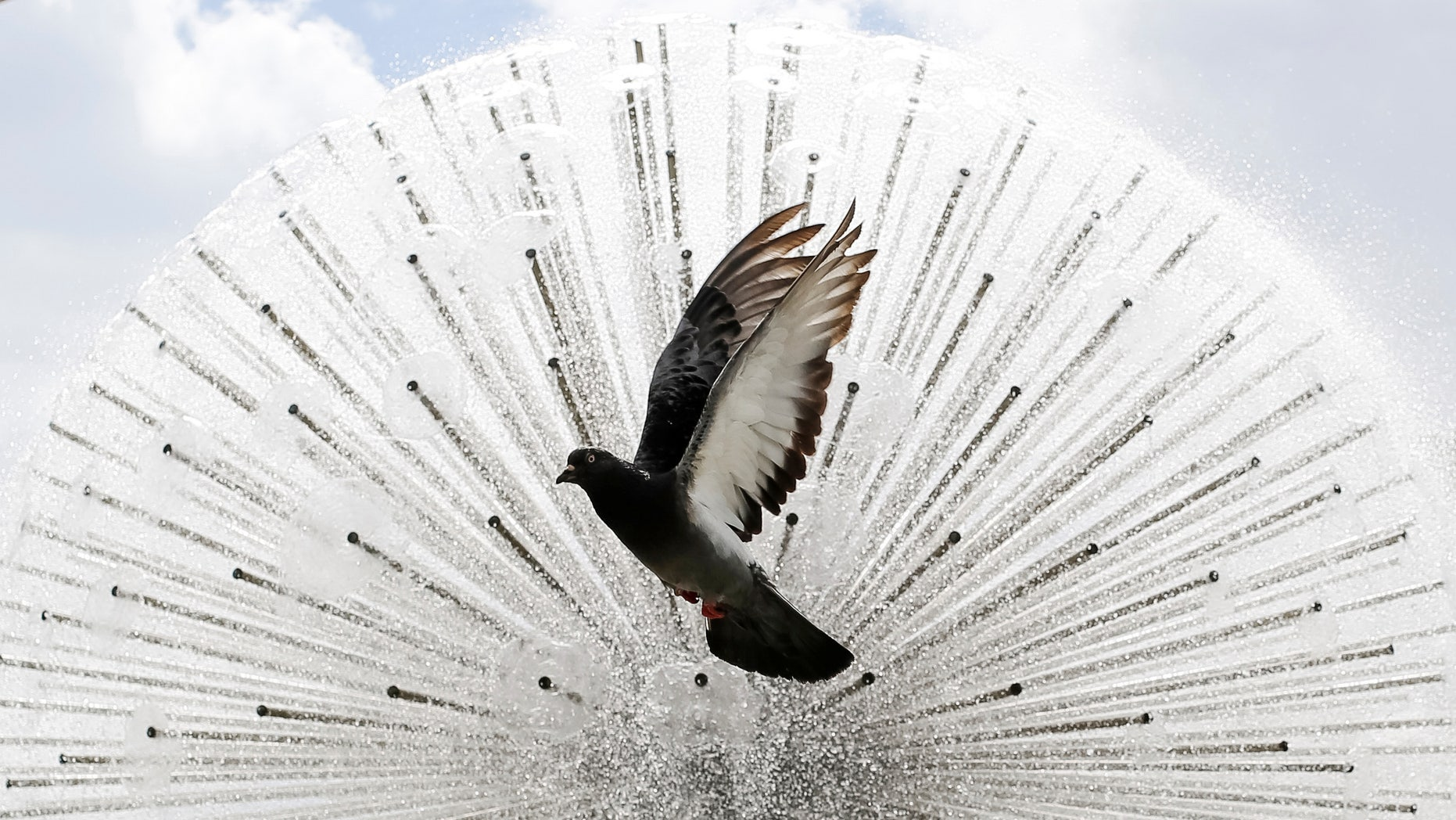 A pigeon flies in front a a fountain during a sunny day in central Kiev, Ukraine, July 8, 2016. (REUTERS/Gleb Garanich)