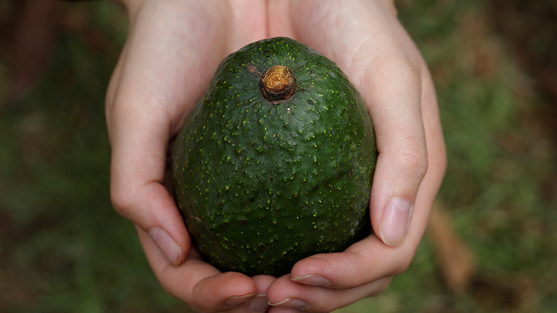 The Mexican attorney general's office said organized crime cells are using government records to identify and eventually extort avocado producers.