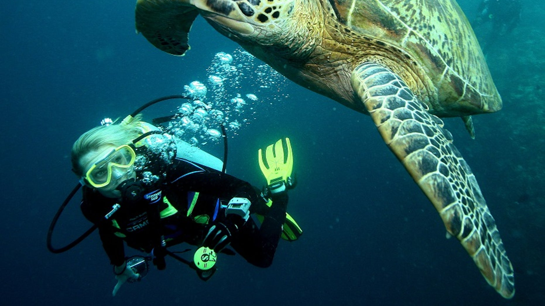 A diver swims near a giant turtle at a diving site near the island of Sipadan in Celebes Sea east of Borneo November 7, 2005.