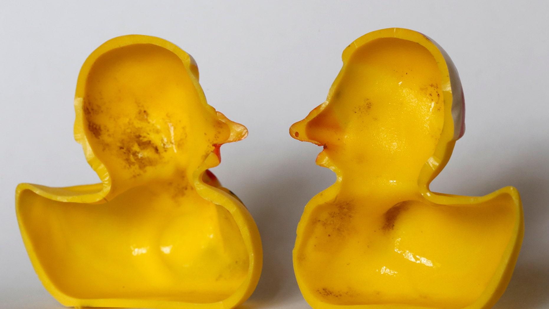 Yucky ducky? Study reveals bath-time toy\'s dirty secret | Fox News