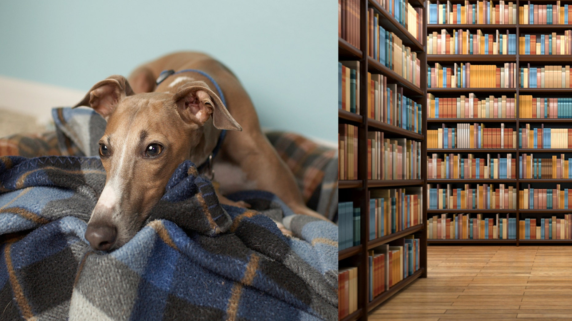 A sorrowful-looking greyhound made the rounds on social media, after no one showed up for his story time hour at the library.