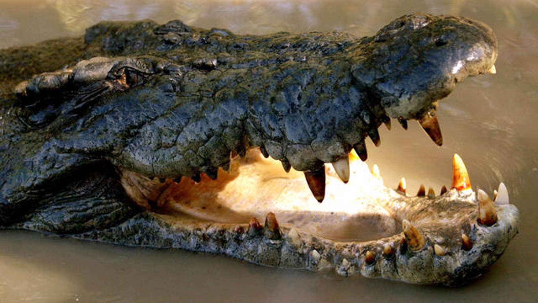FILE photo of saltwater crocodile in Adelaide River, Australia.