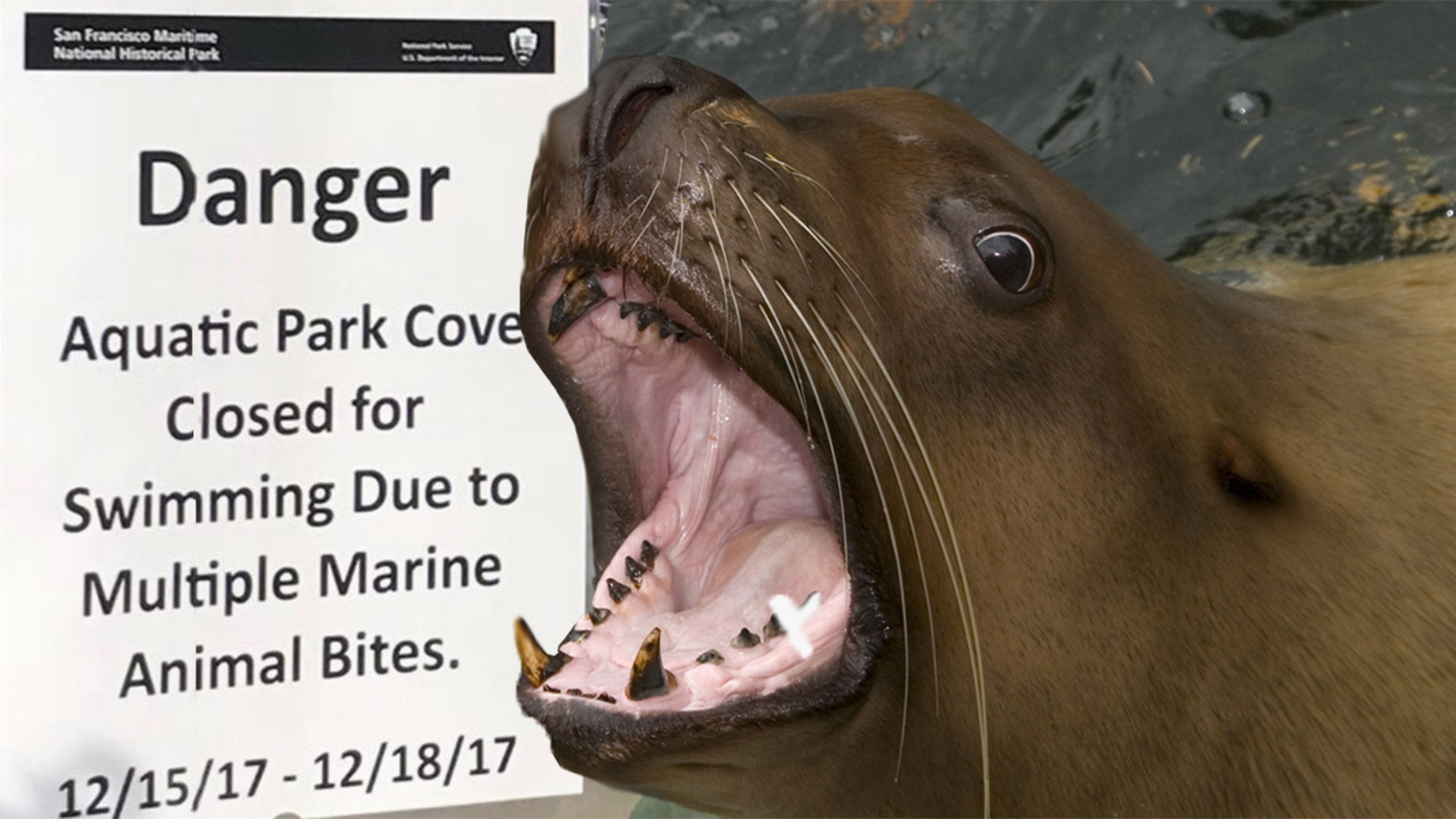 Sea lion bites female swimmer in San Francisco Bay, the ...