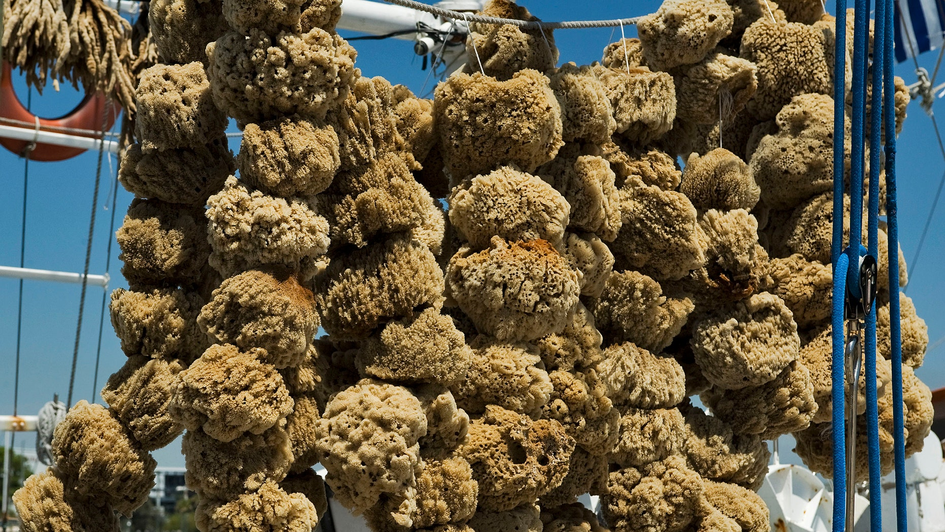 File photo - Sponges hang in the sun off a shroud line on a sponge boat tied up on the dock along the Anticlote River in Tarpon Springs, Florida, April 6, 2014. (REUTERS/Steve Nesius)
