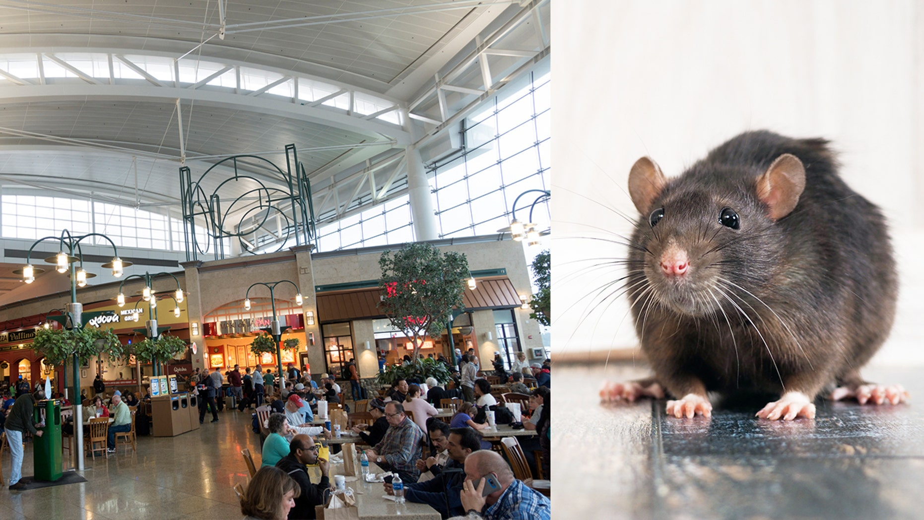 SeaTac officials and restaurant vendors are working hard to keep the critters away.