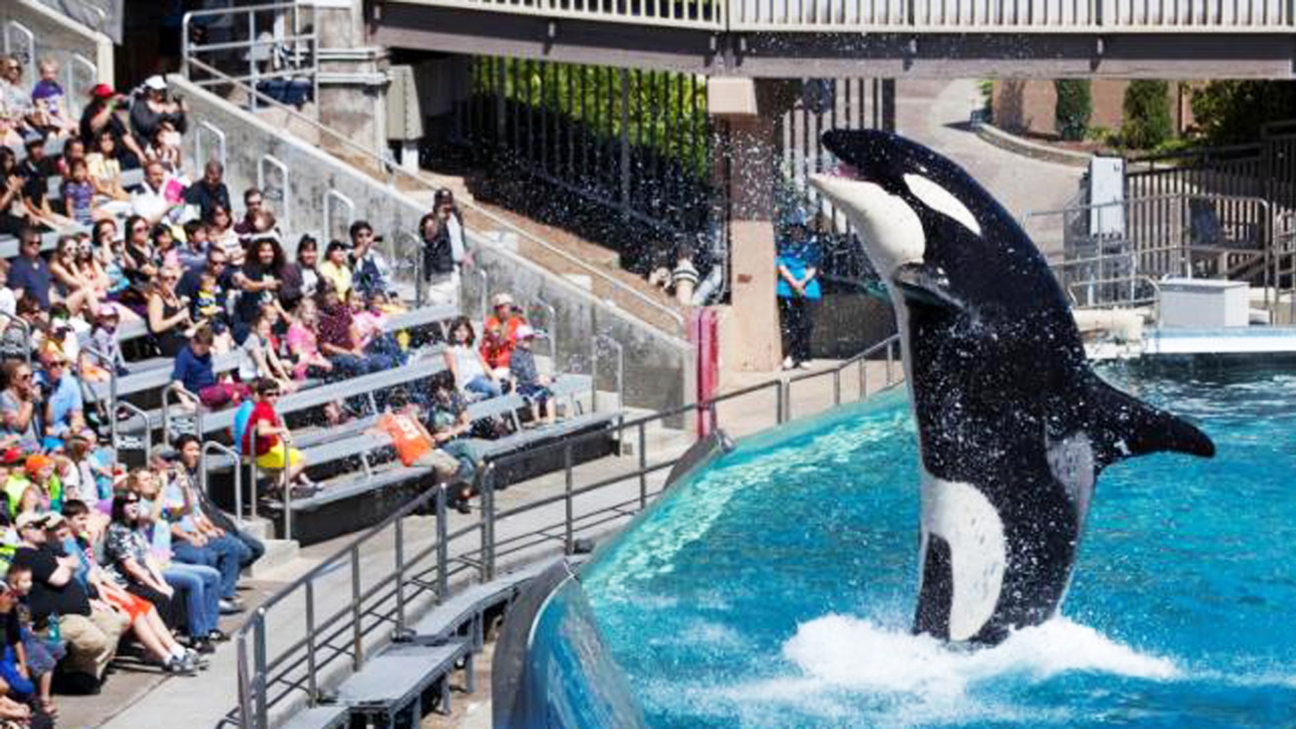 The traditional Shamu show at SeaWorld San Diego will be phased out in 2016.