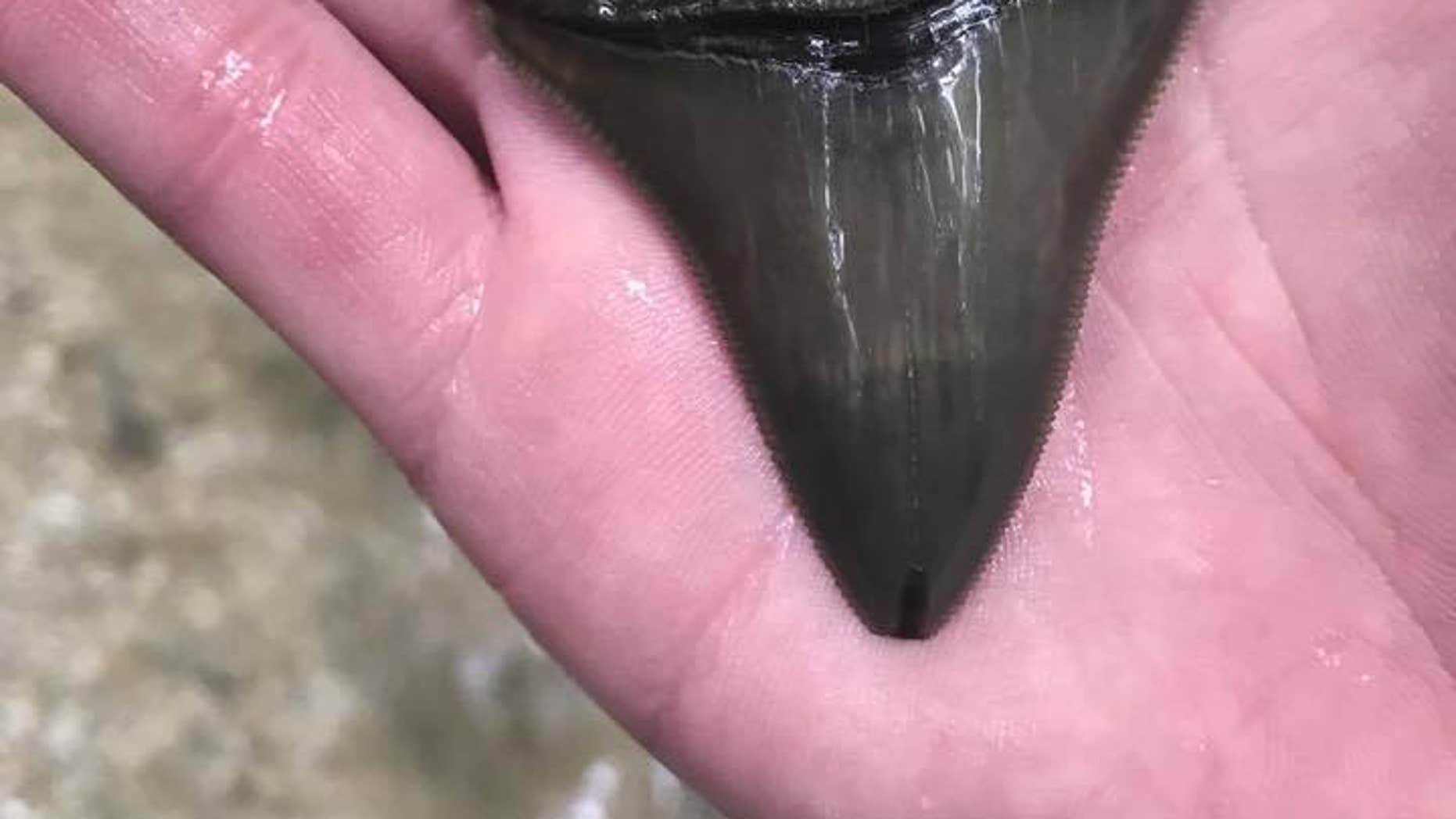 """The state's department of natural resources called the shark teeth a """"cool find."""""""