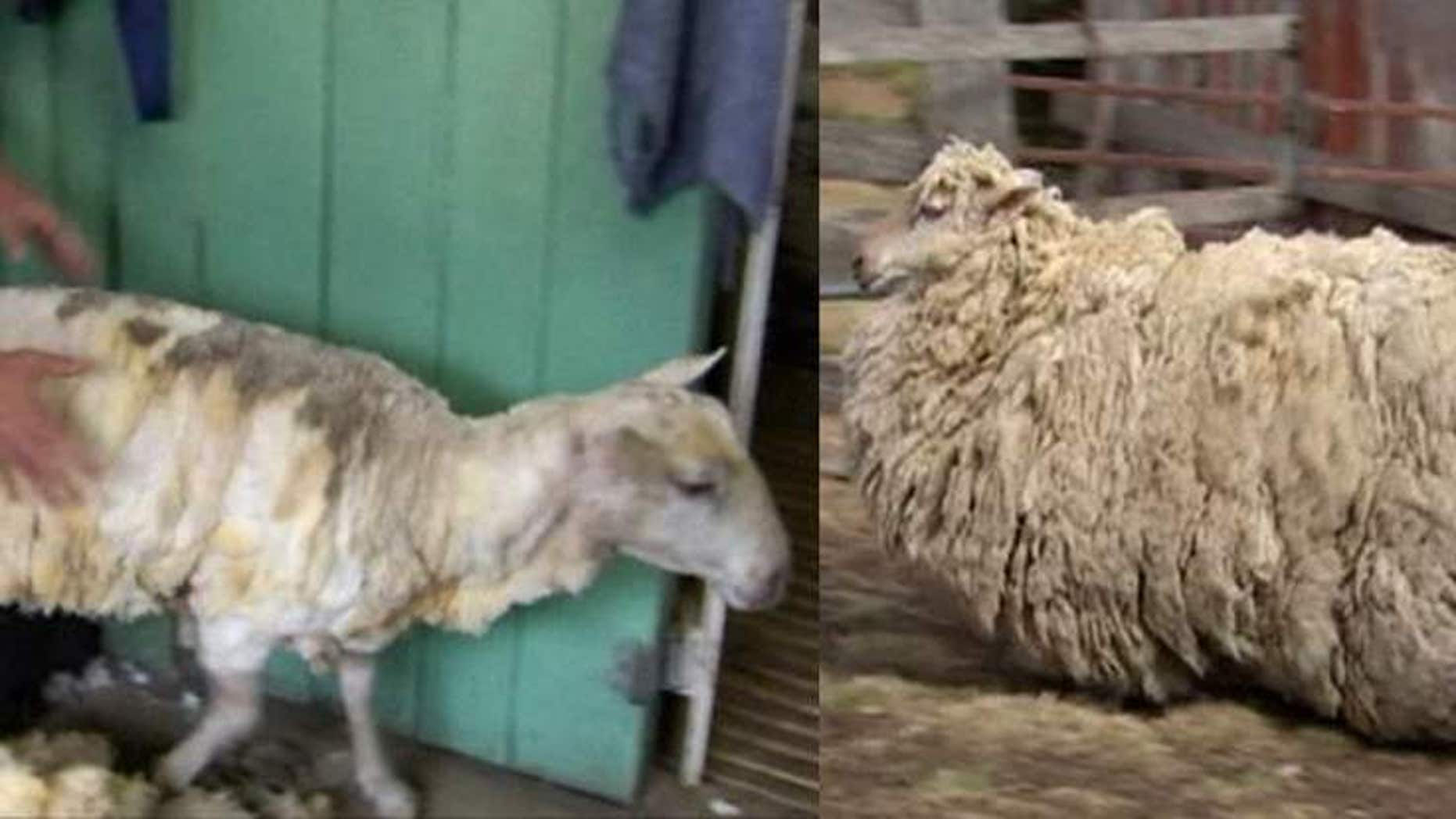 Sheila before and after her big hair cut. (Sky News)