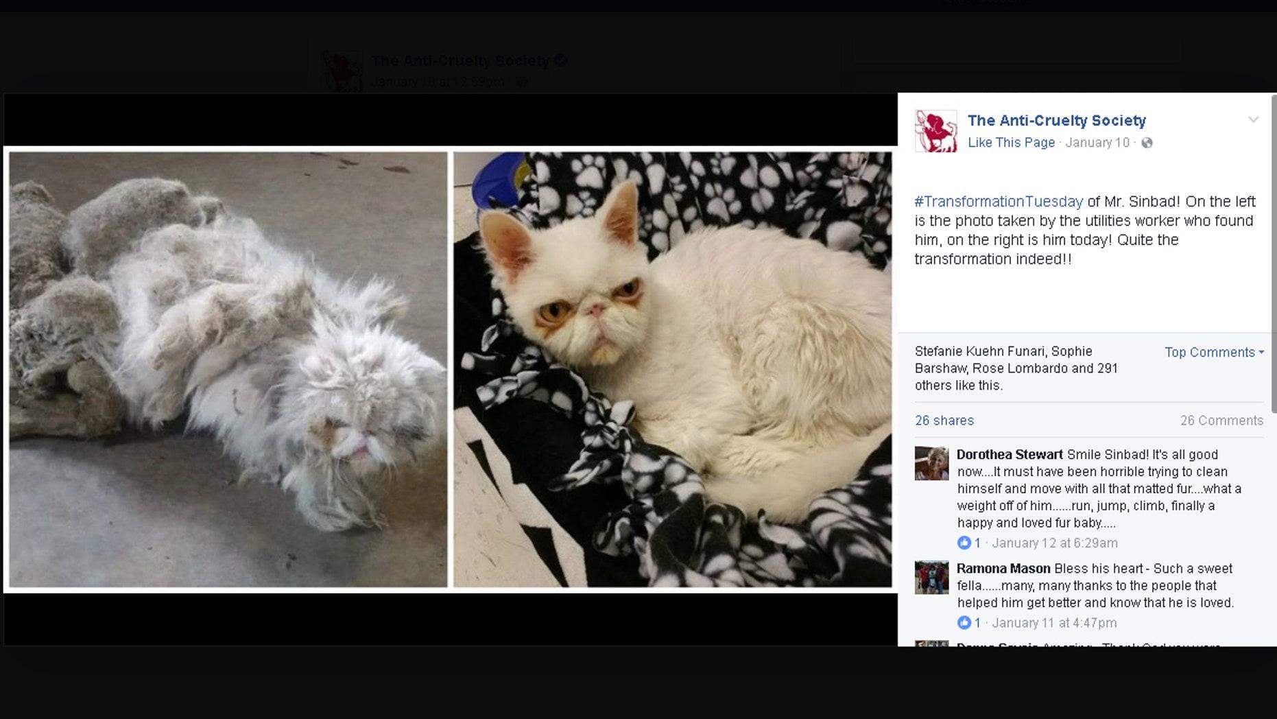 (Facebook/The Anti-Cruelty Society)