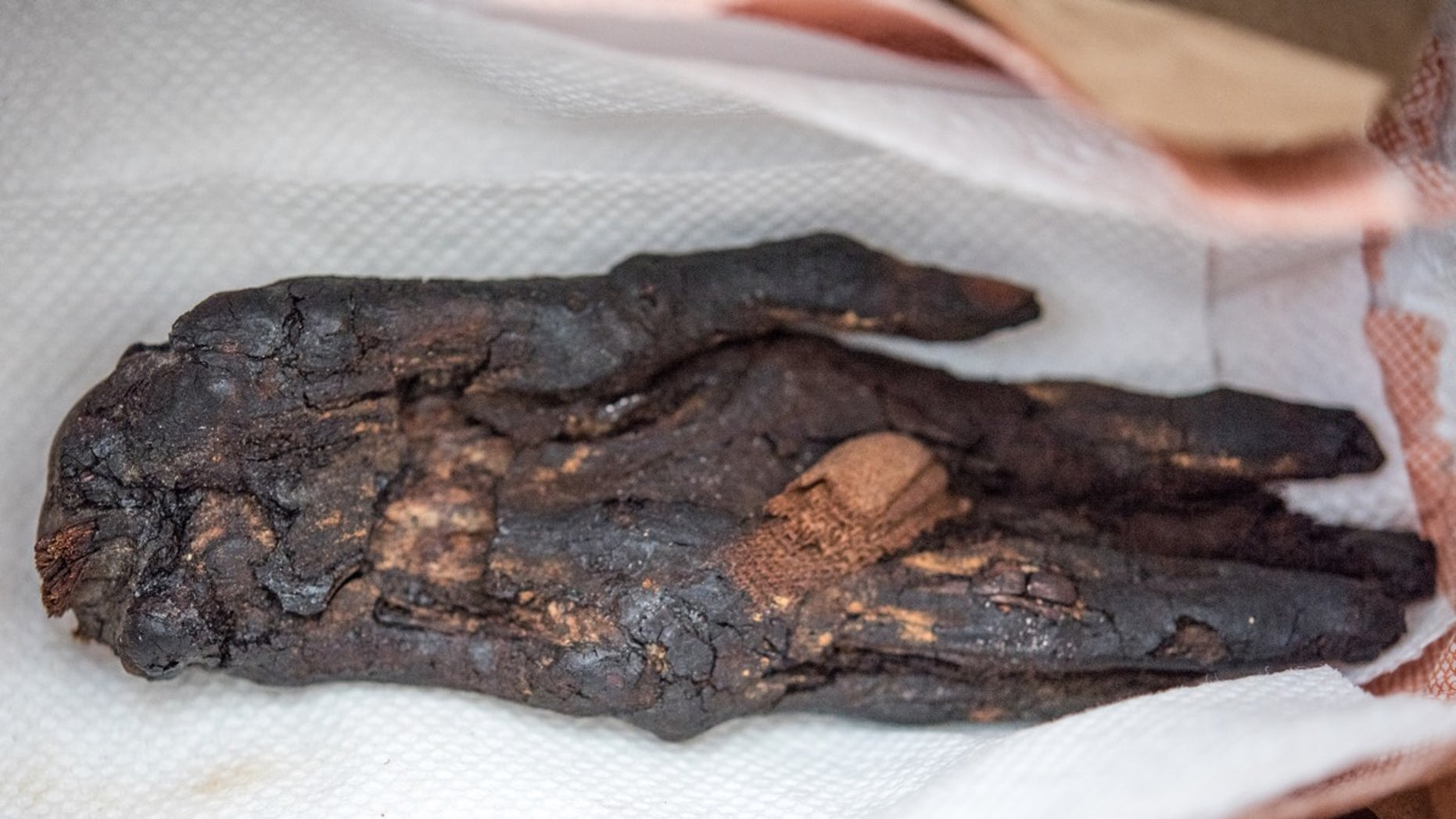 This mummy hand, from the eighth century B.C., had been smuggled into the United States from Egypt.