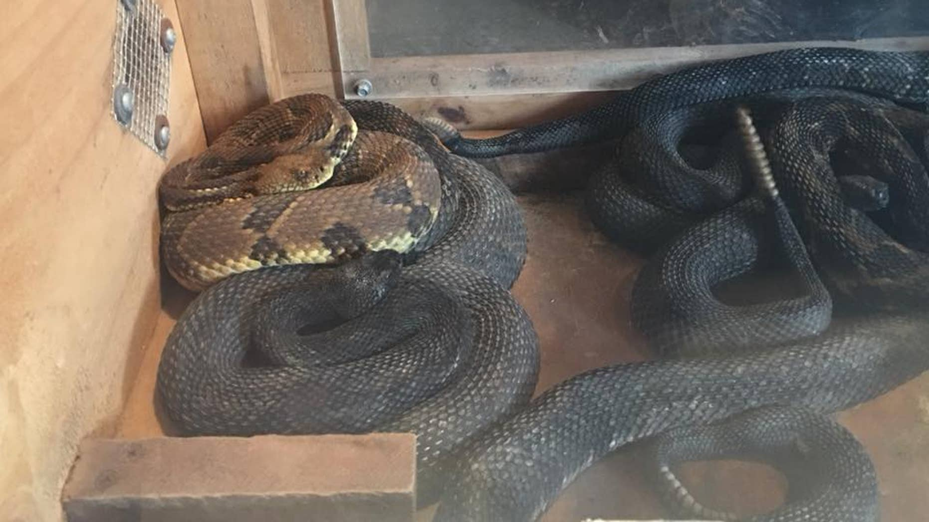 The man, who has not yet been named, was arrested and charged after officials found 17 rattlesnakes in his home.