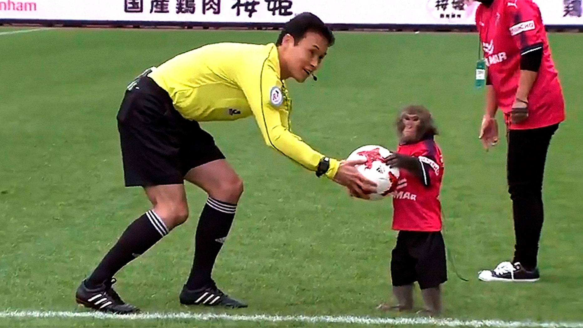 A macaque was used by a J League soccer club in a stunt to kick off a recent match.
