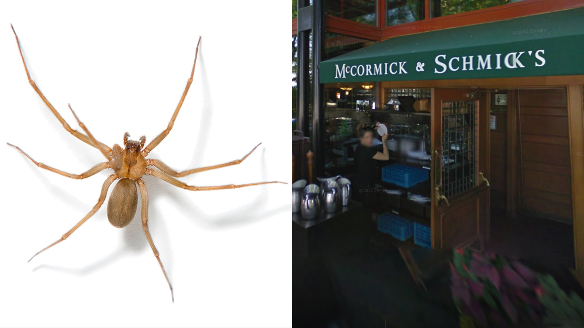 A general manager at McCormick and Schmick's in Oregon is suing for $999,999 after he allegedly was bit by a dangerous brown recluse spider.