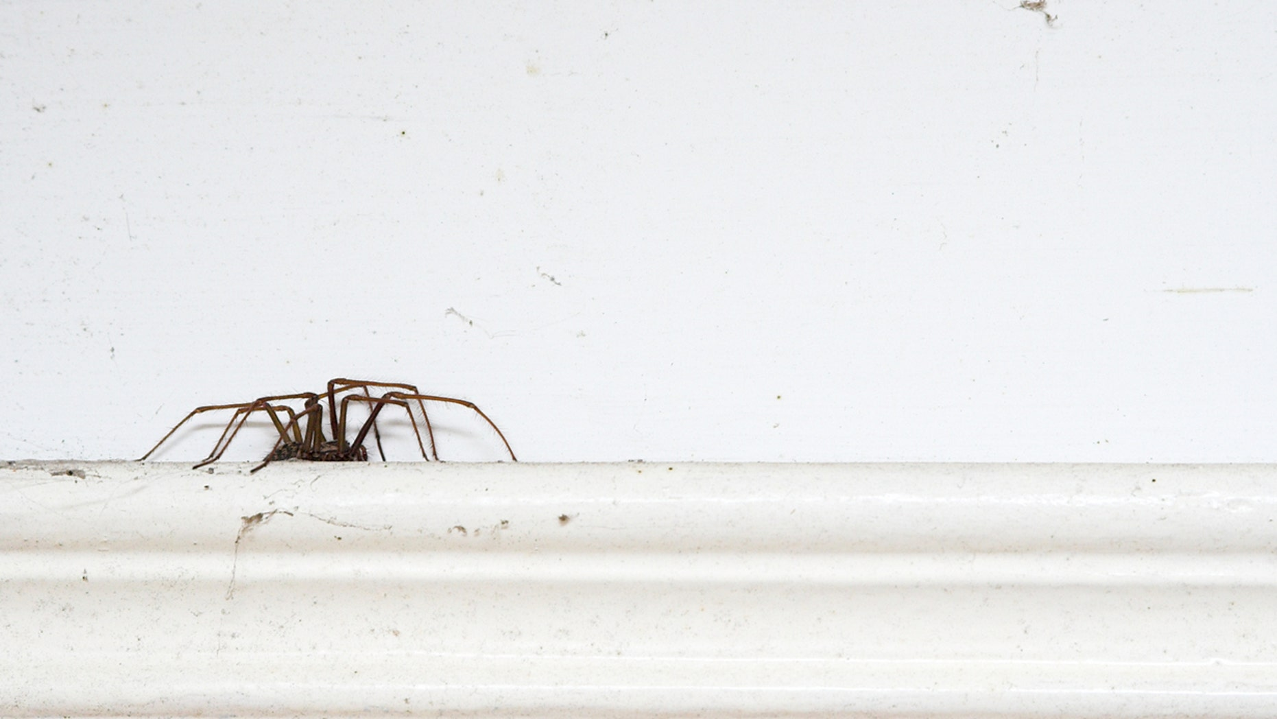 The spider, not pictured, was spotted by doctors at a nearby hospital.