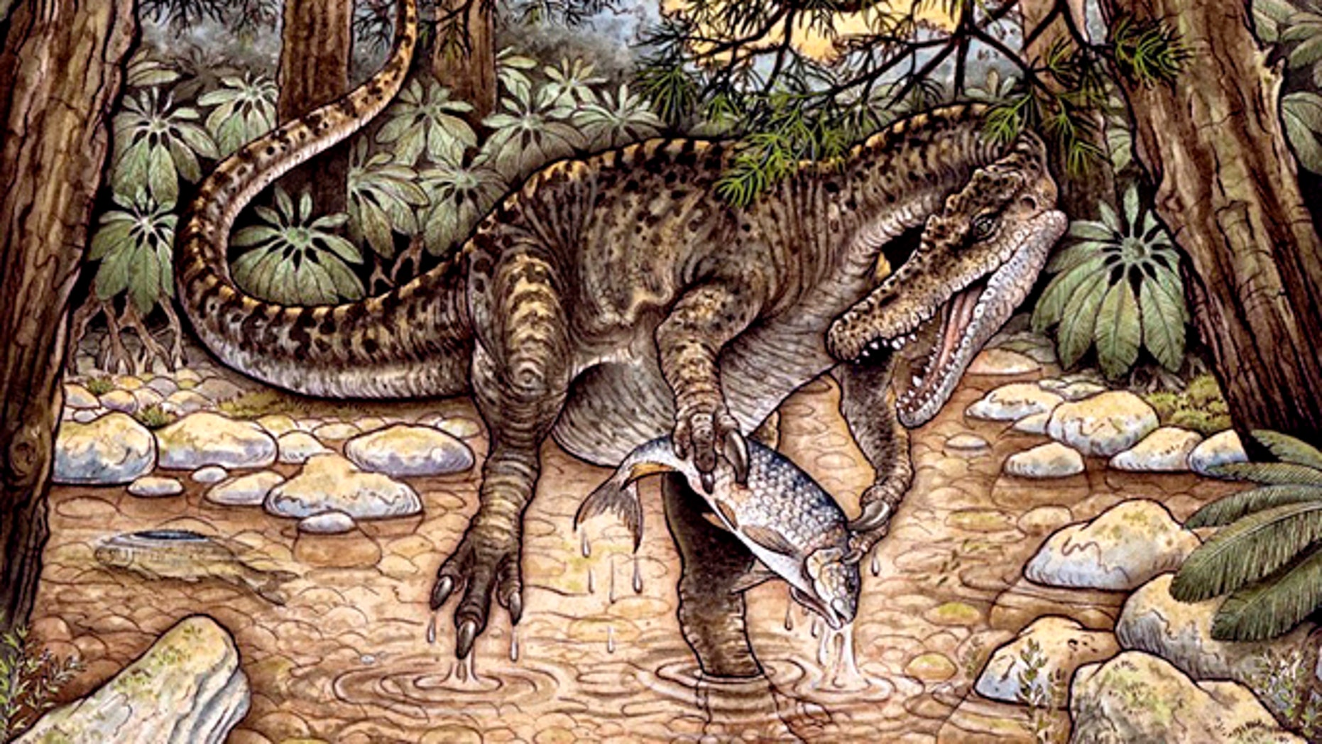 The spinatosaurid Baryonyx Walker roamed Europe during the Cretaceous. A close relative has now been found in Australia.