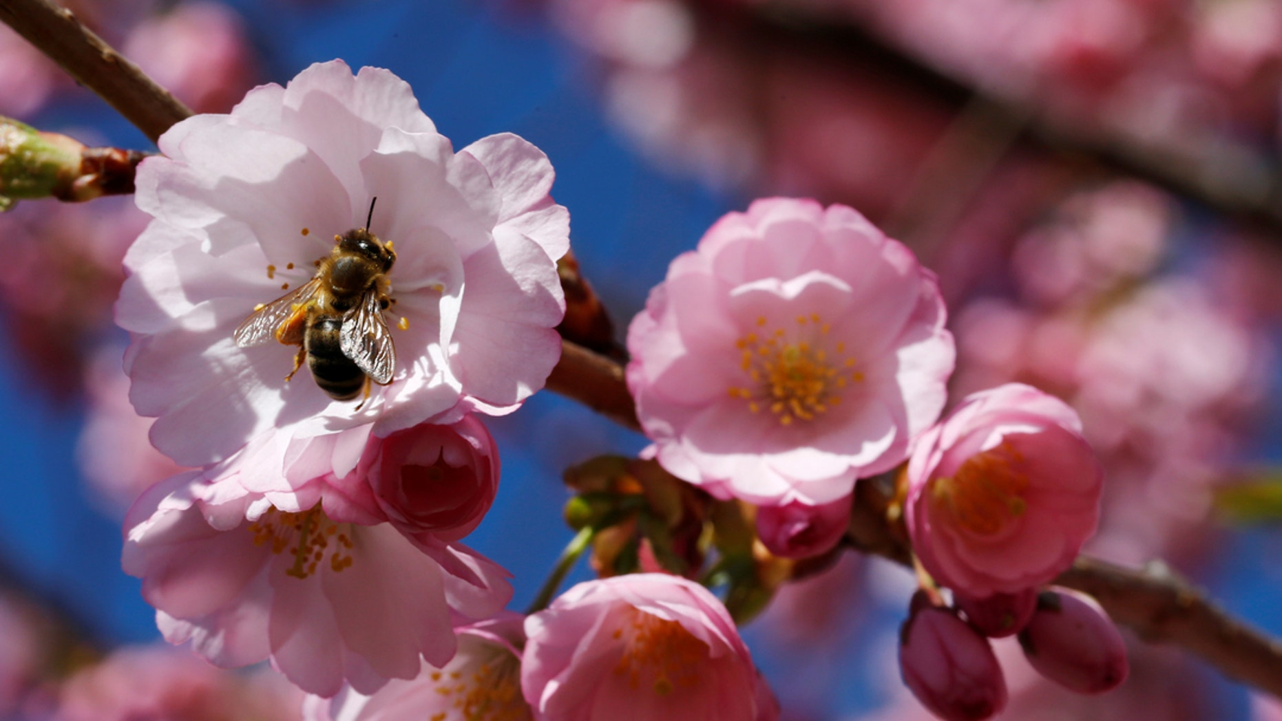 First Day Of Spring Arrives 5 Things To Know About The