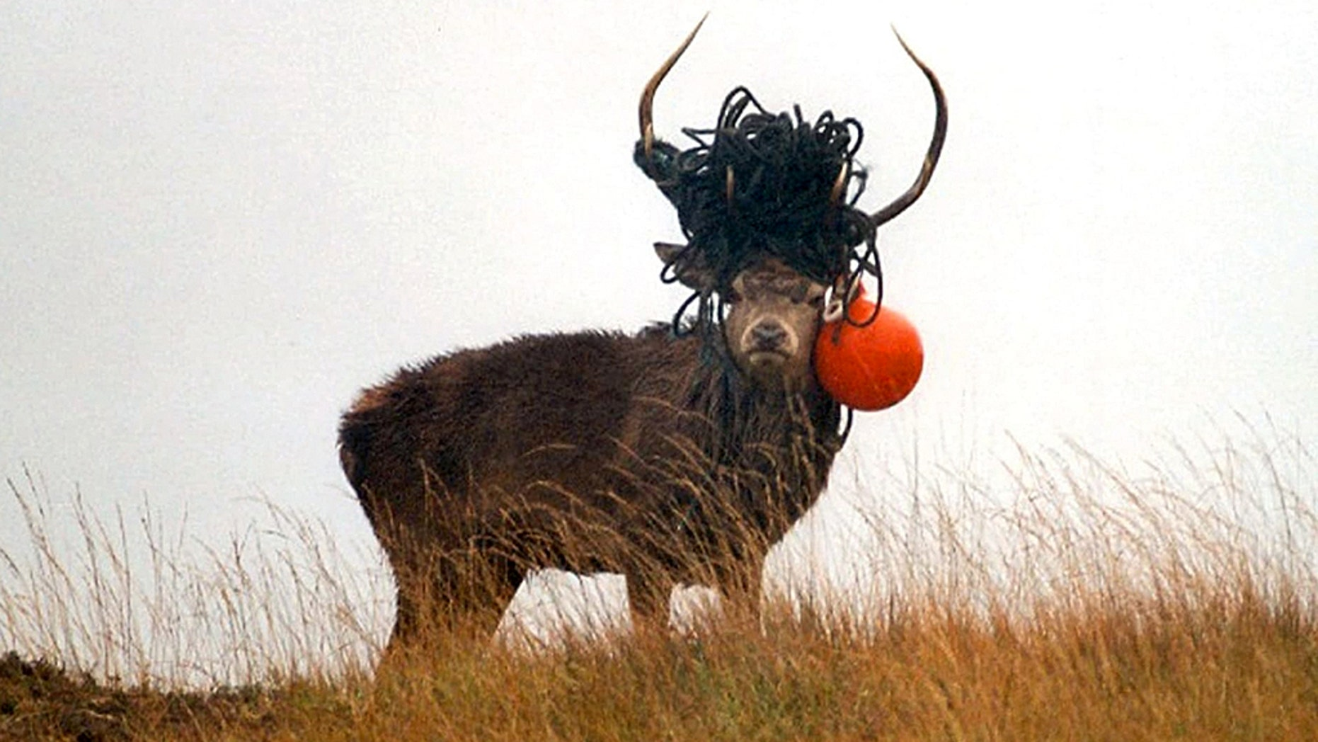 The Scottish National Heritage released the photos to highlight the troubling effects of pollution on wildlife.