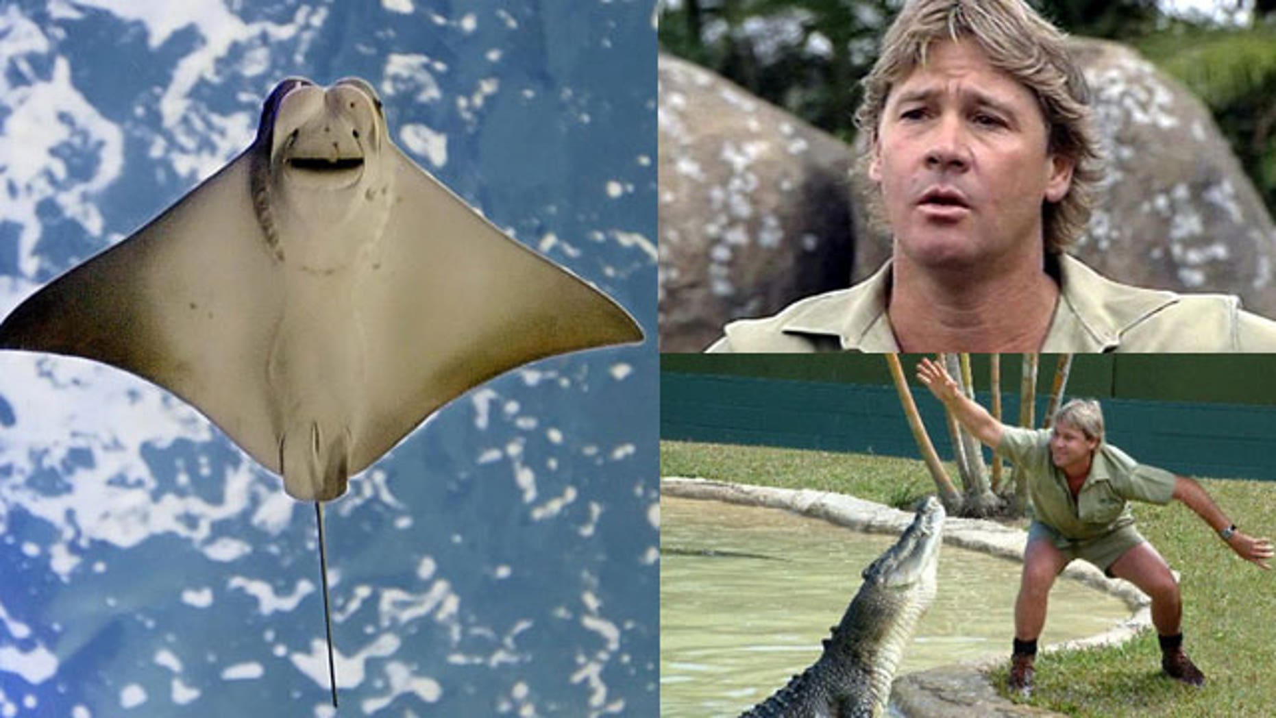 """Steve Irwin, the hugely popular Australian television personality and conservationist known as the """"Crocodile Hunter,"""" was killed in 2006 by a stingray while filming off the Great Barrier Reef. He was 44."""