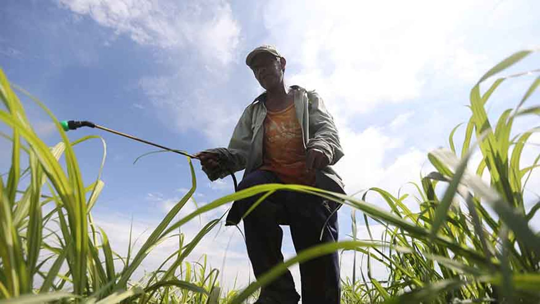 Worker sprays fertilizer in a sugar cane field in Zacatepec de Hidalgo, in Morelos state, Mexico.