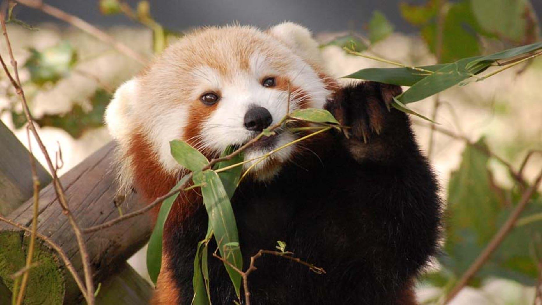 AP/Virginia Zoo