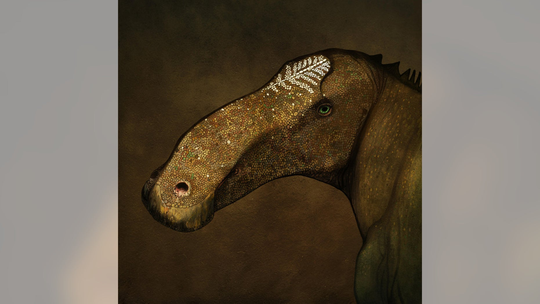 Artist's reconstruction of the head of Probrachylophosaurus bergei in life.
