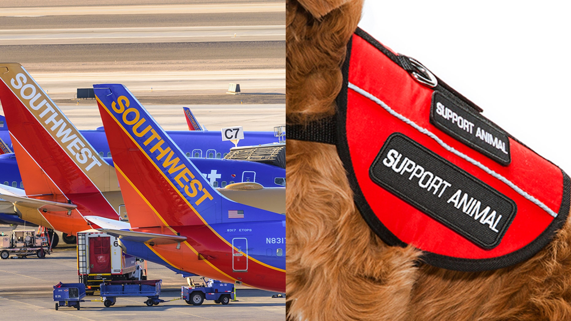 An emotional support dog injured a child on a Southwest plane, scraping its teeth against the child's forehead.