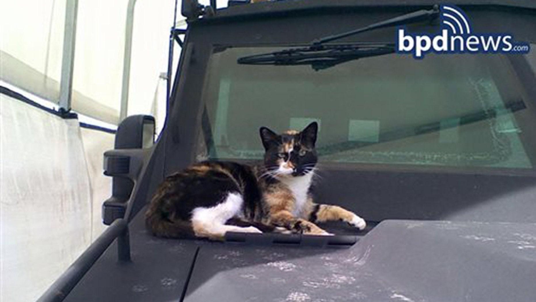 Boston Swat Team Reunited With Its Cat Fox News