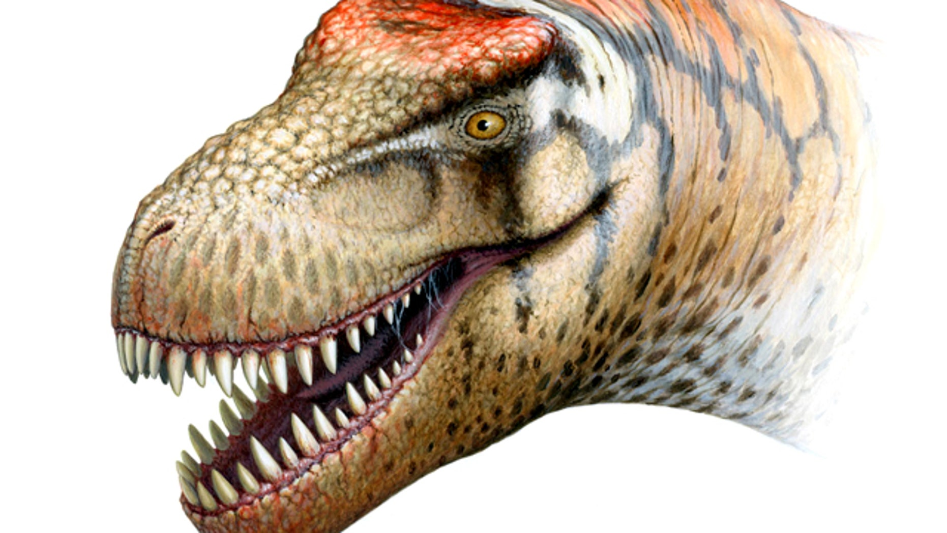 The newly identified T. rex relative probably weighed some 6 tons when it lived in what is now China.