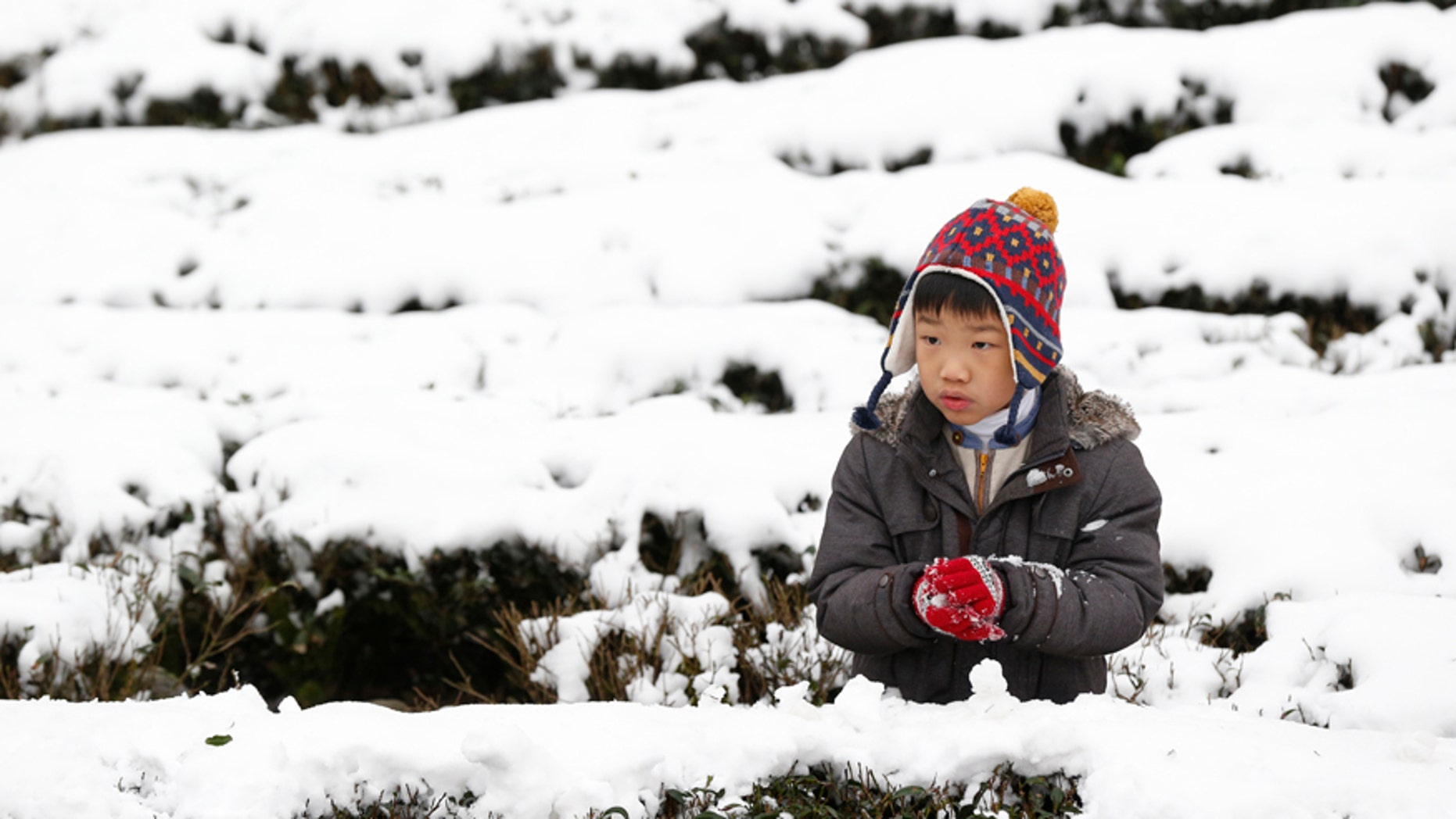 Jan. 25, 2016: A young boy visits a snow-covered tea plantation in the Pinglin mountain area of New Taipei City, Taiwan.