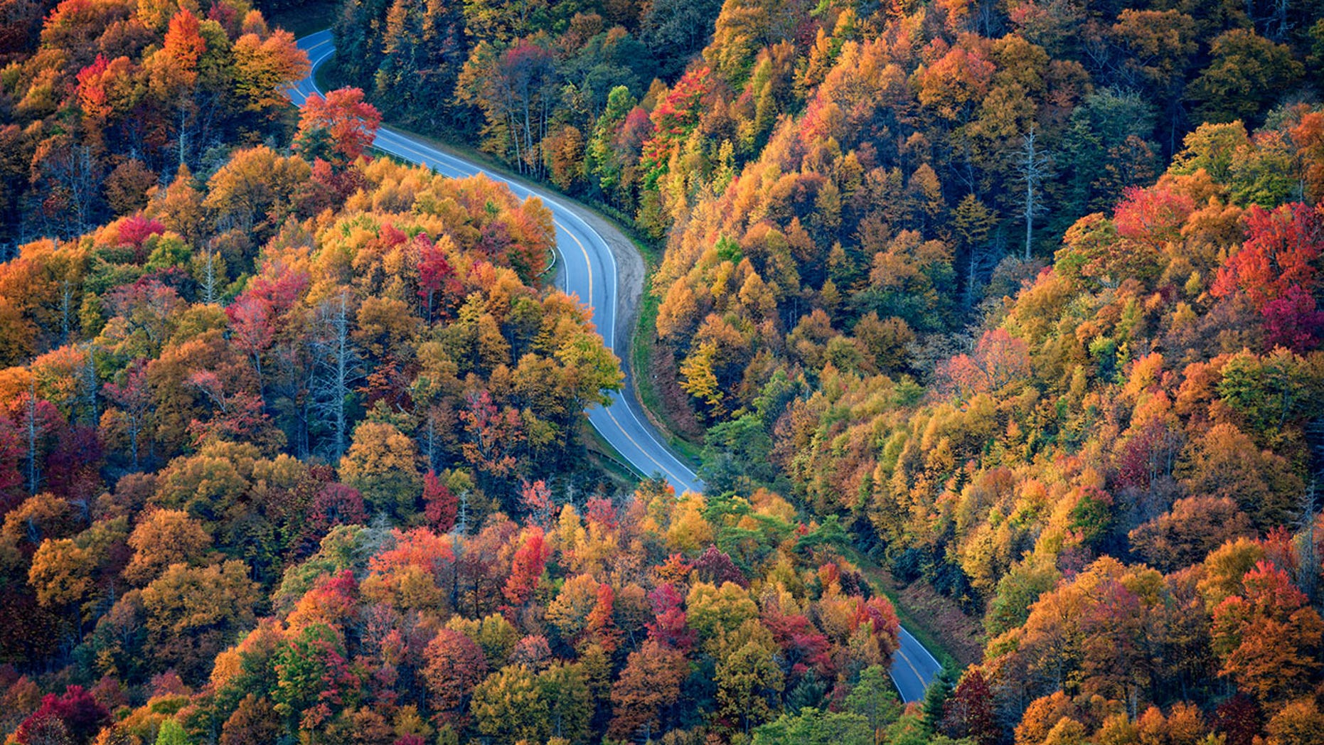 Many will now be able to see fall foliage in its full splendor for the first time.