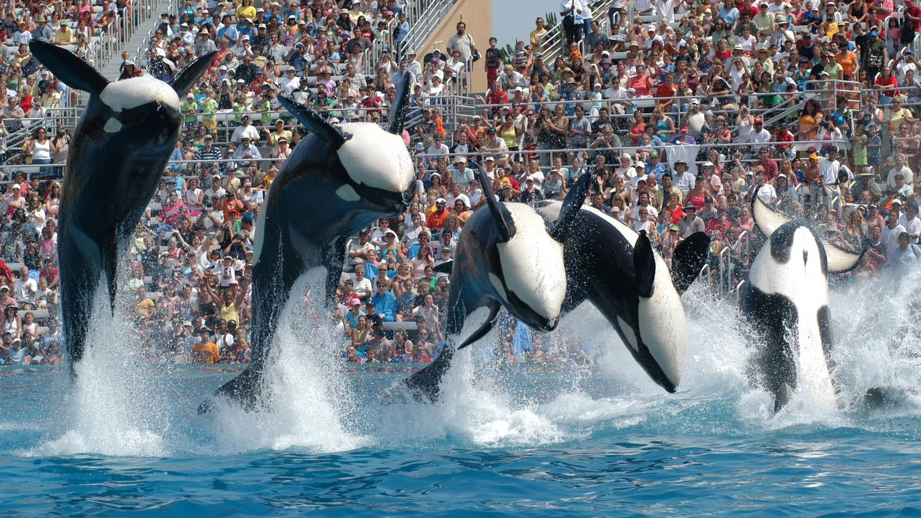 SeaWorld has reported declining attendance rates after receiving negative backlash over the documentary 'Blackfish.'