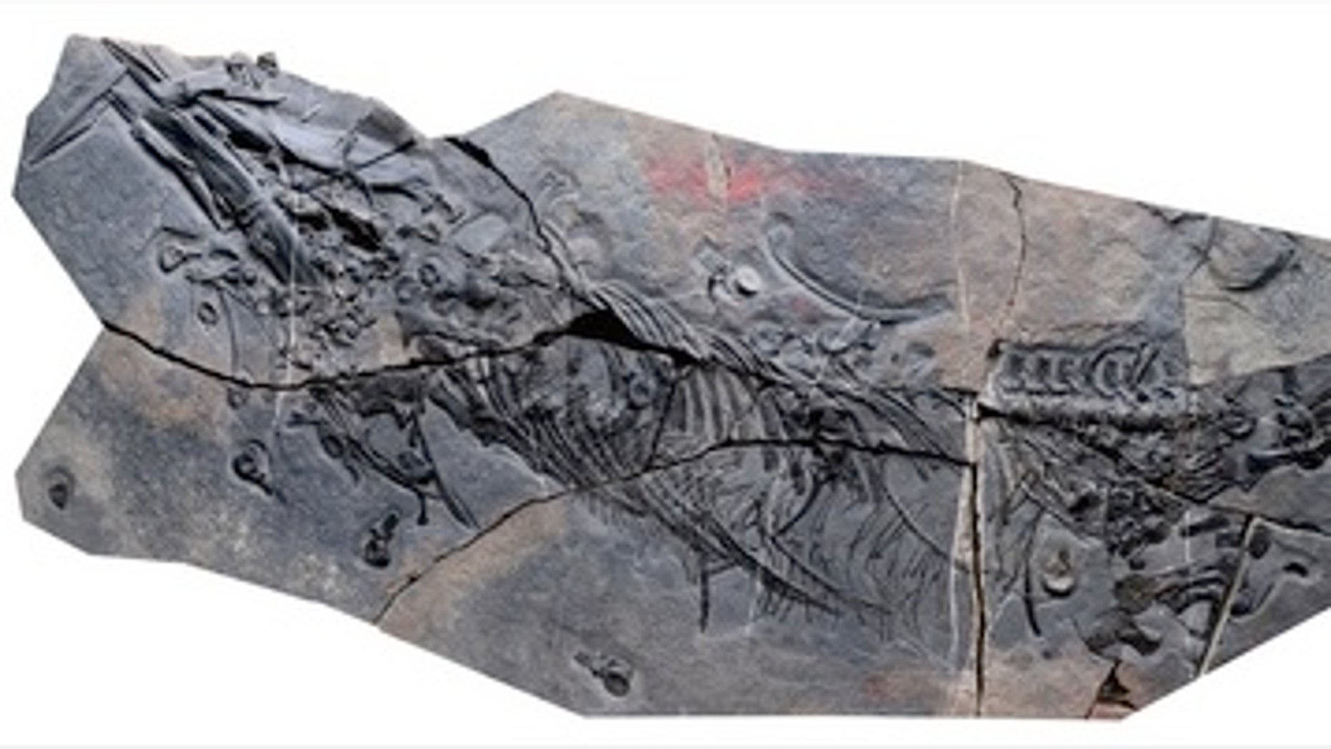 The newly identified species of thalattosaur discovered in China is almost 7 feet long (2.1 meters).