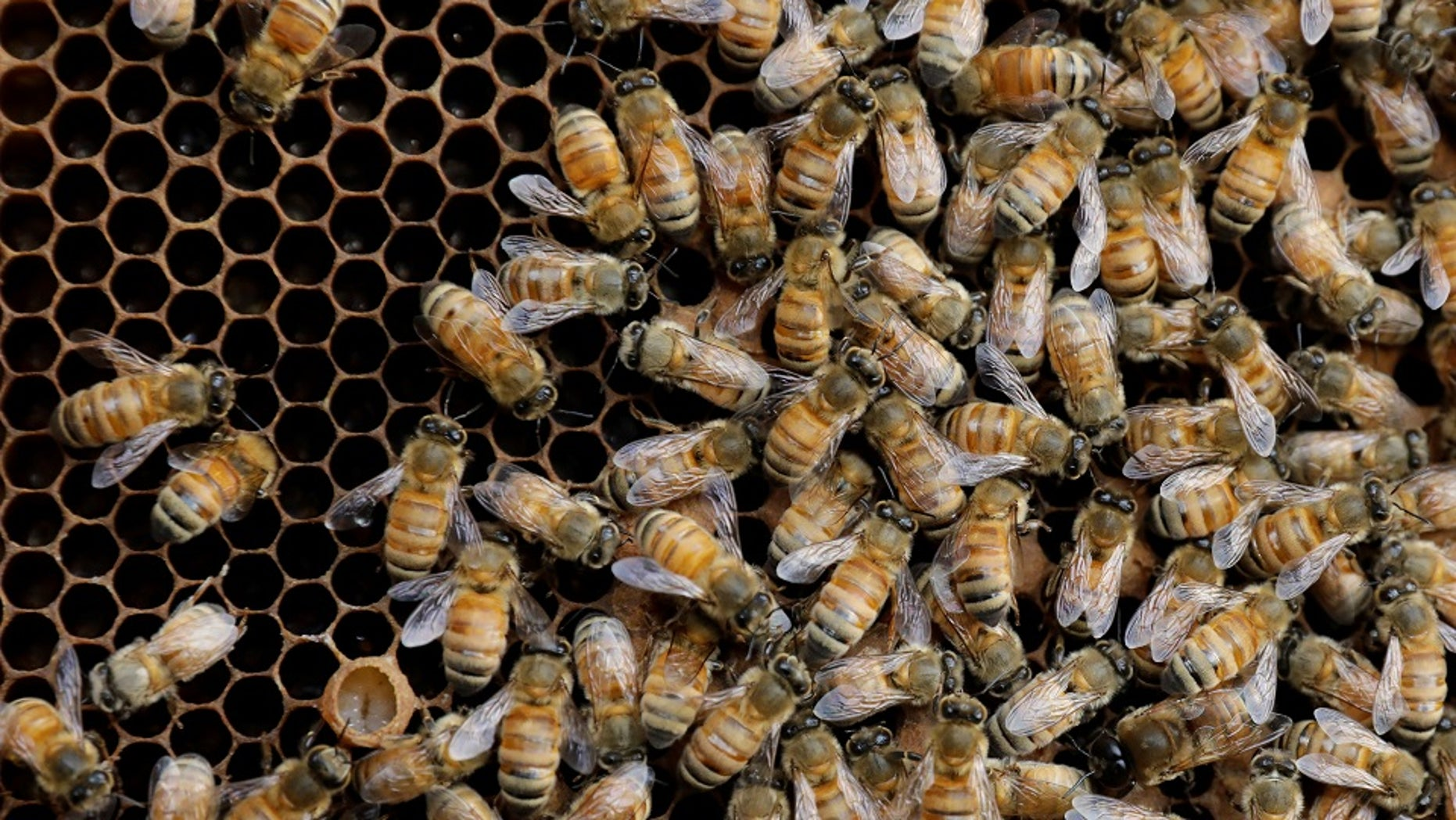 A million aggressive bees were found in a home that is threatening an El Paso neighborhood.