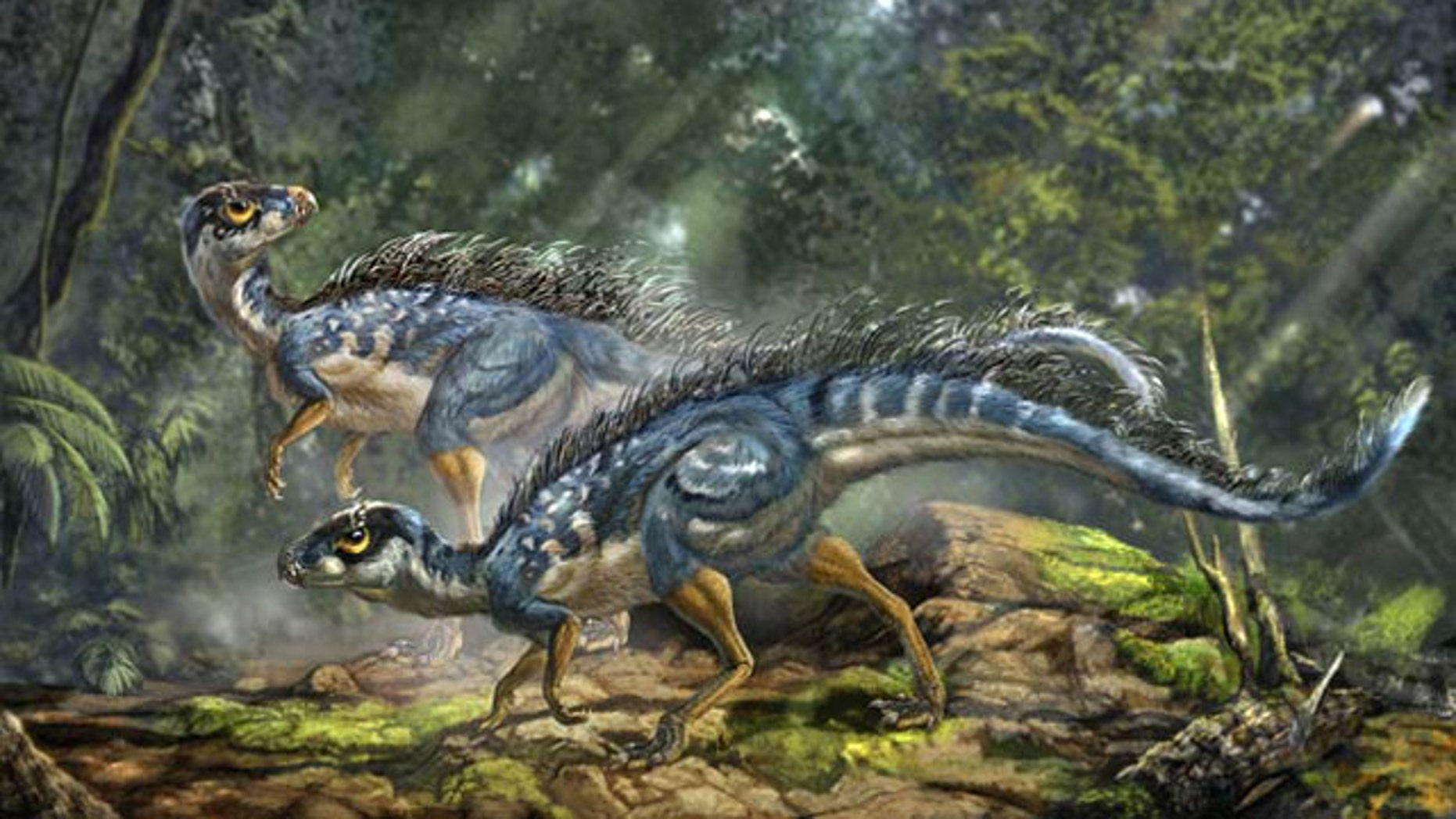 Artist's reconstruction of Tianyulong confuciusi, a feathered heterodontosaurid ornithischian dinosaur.