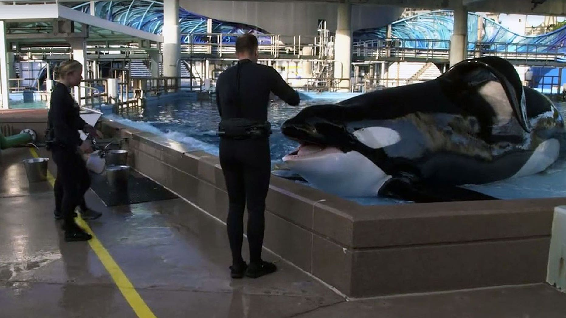 Tilikum was estimated to be 36 years old.