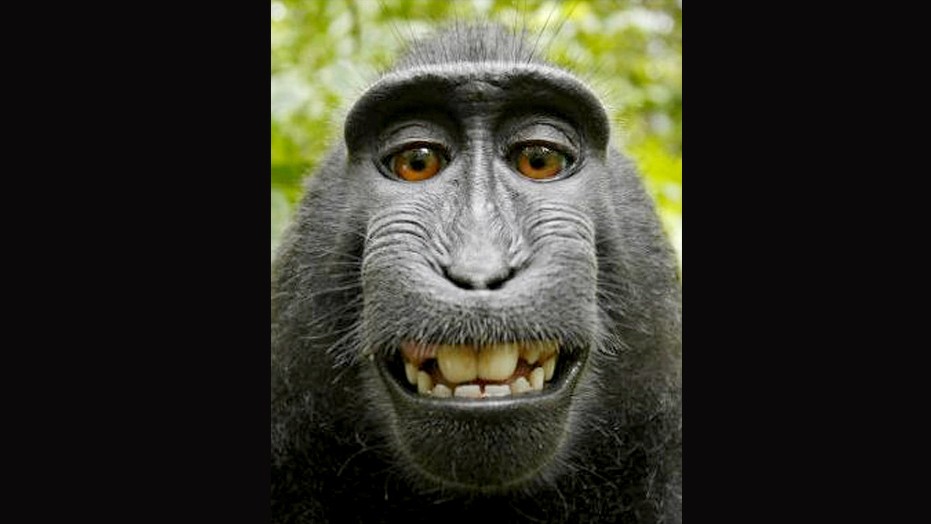 A settlement was made Monday in federal appeals court about a lawsuit over who owns the copyright to selfie photographs taken by a monkey.