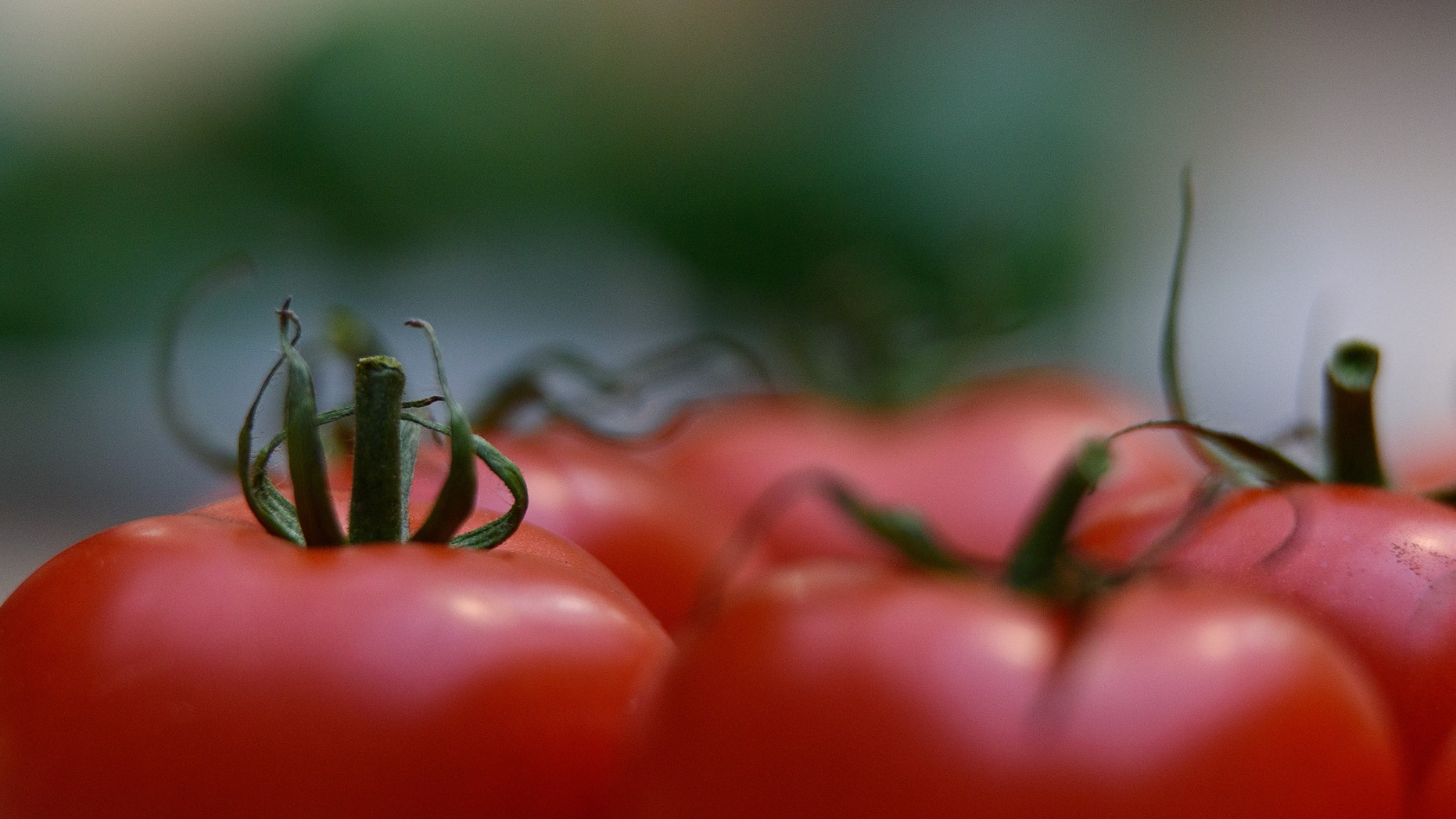 LONDON, ENGLAND - OCTOBER 06:  A tomato on display during the RHS (Royal Horticultural Society) London Harvest Festival Show at RHS Lindley Halls on October 6, 2015 in London, England. The traditional harvest themed show runs October 6-7 and showcases a wide range of late summer grown fruit and vegetables.  (Photo by Ben Pruchnie/Getty Images)