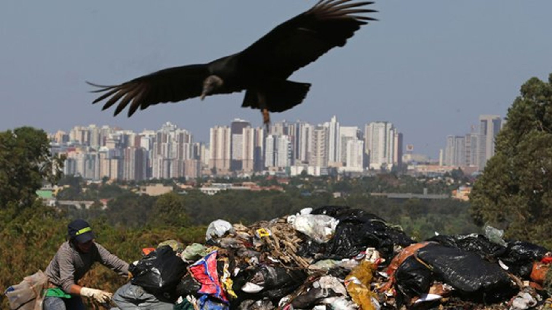 A vulture flies over the Estrutual landfill where a man searches for recyclable materials near downtown in Brasilia, Brazil.
